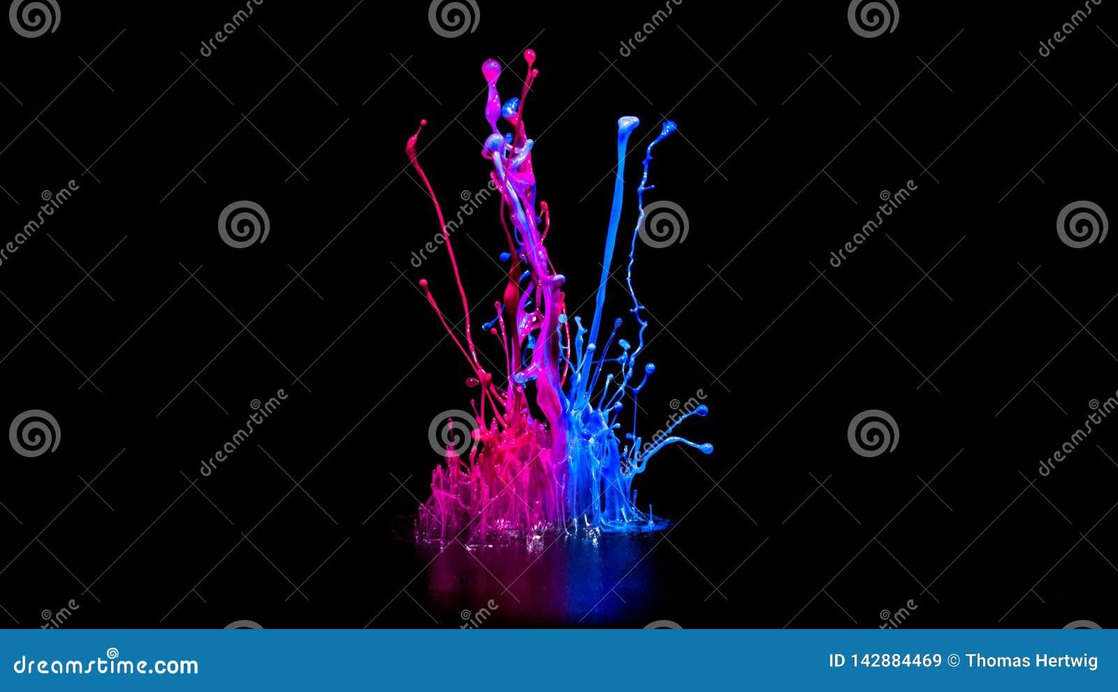 Rosa och blå målarfärg som plaskar på den ljudsignal högtalaren som isoleras på svart bakgrund