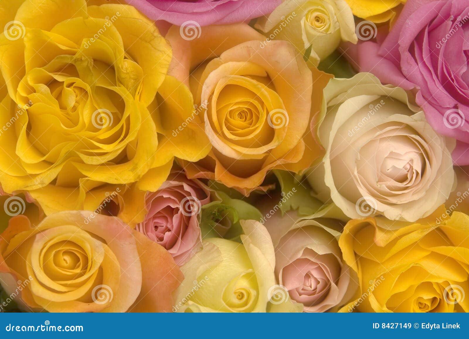 Rosa och gula ro