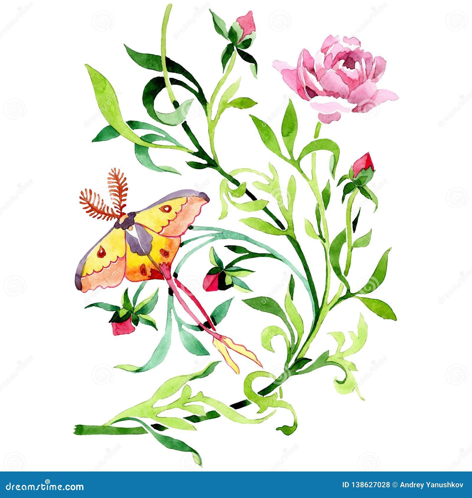 Rosa pion med den blom- botaniska blomman för fjäril set vattenfärg för bakgrundsgrunddesign Isolerad prydnadillustrationbestånds
