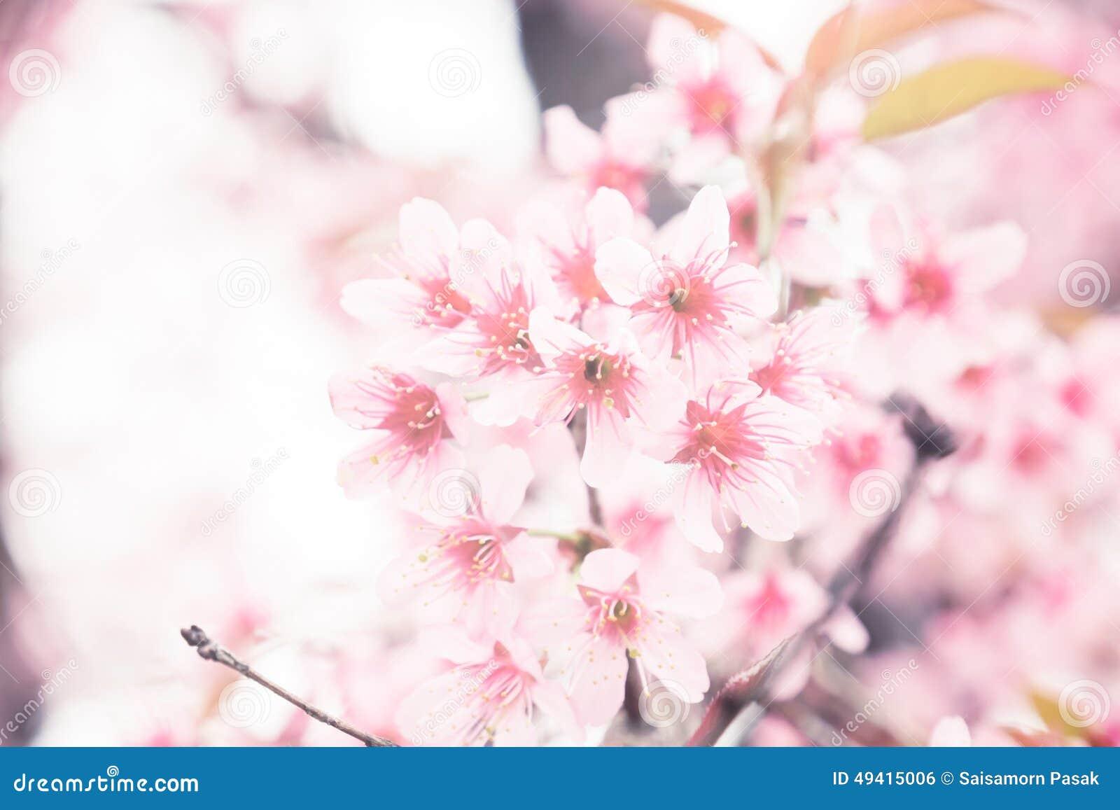 Download Rosa Retro- Weinlese Der Kirschblüte Stockfoto - Bild von kirsche, pink: 49415006