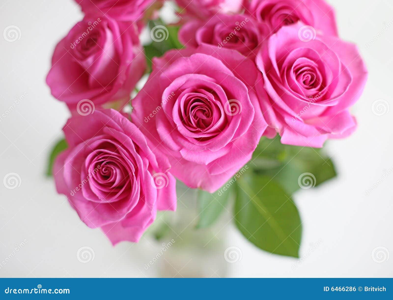 Rosa ro