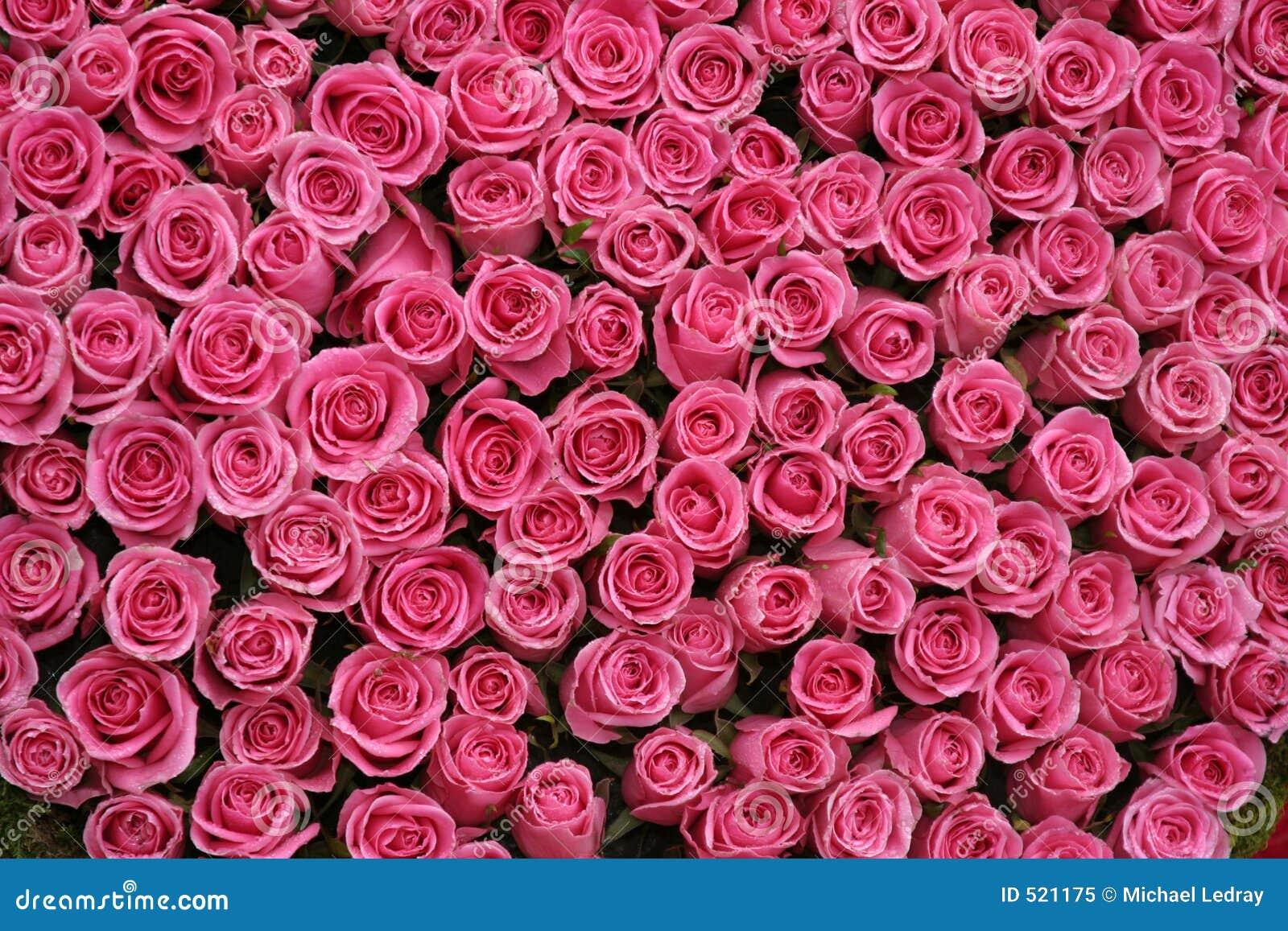 Rosa ro för grupper