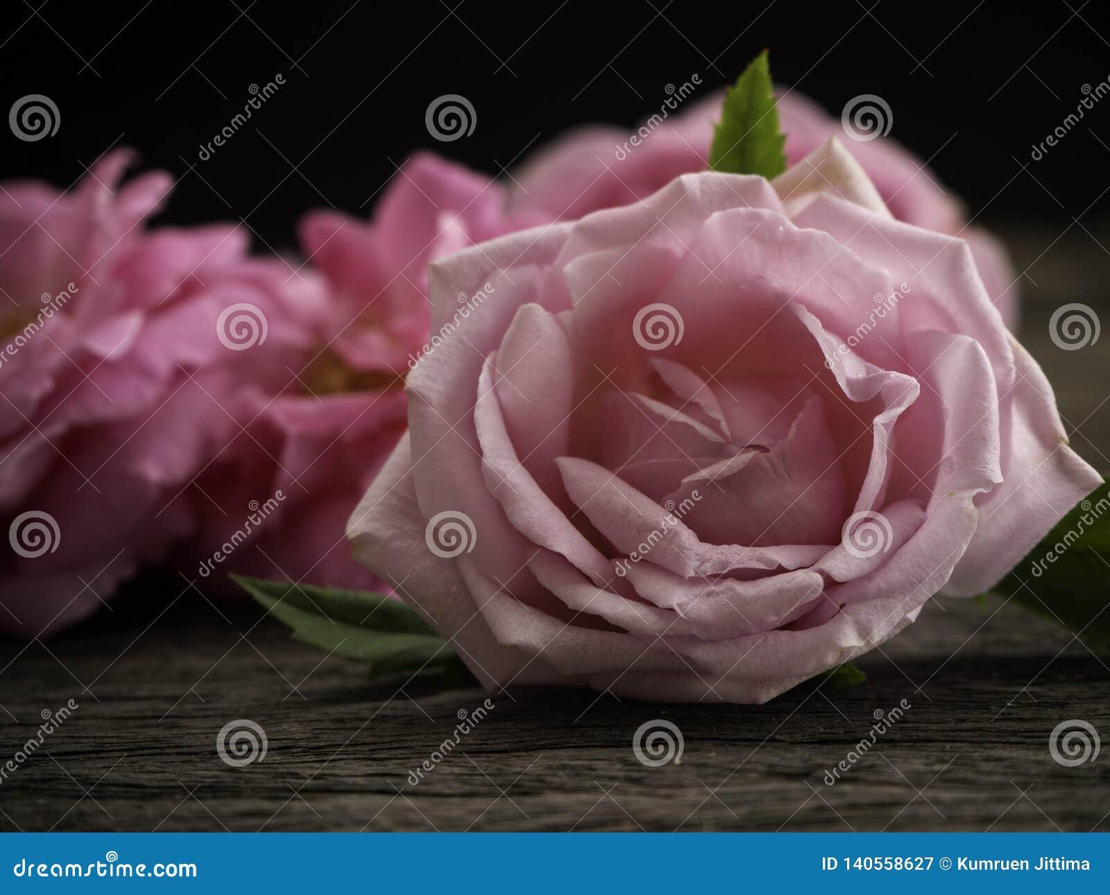 Rosa Rosen auf dem alten Bretterboden
