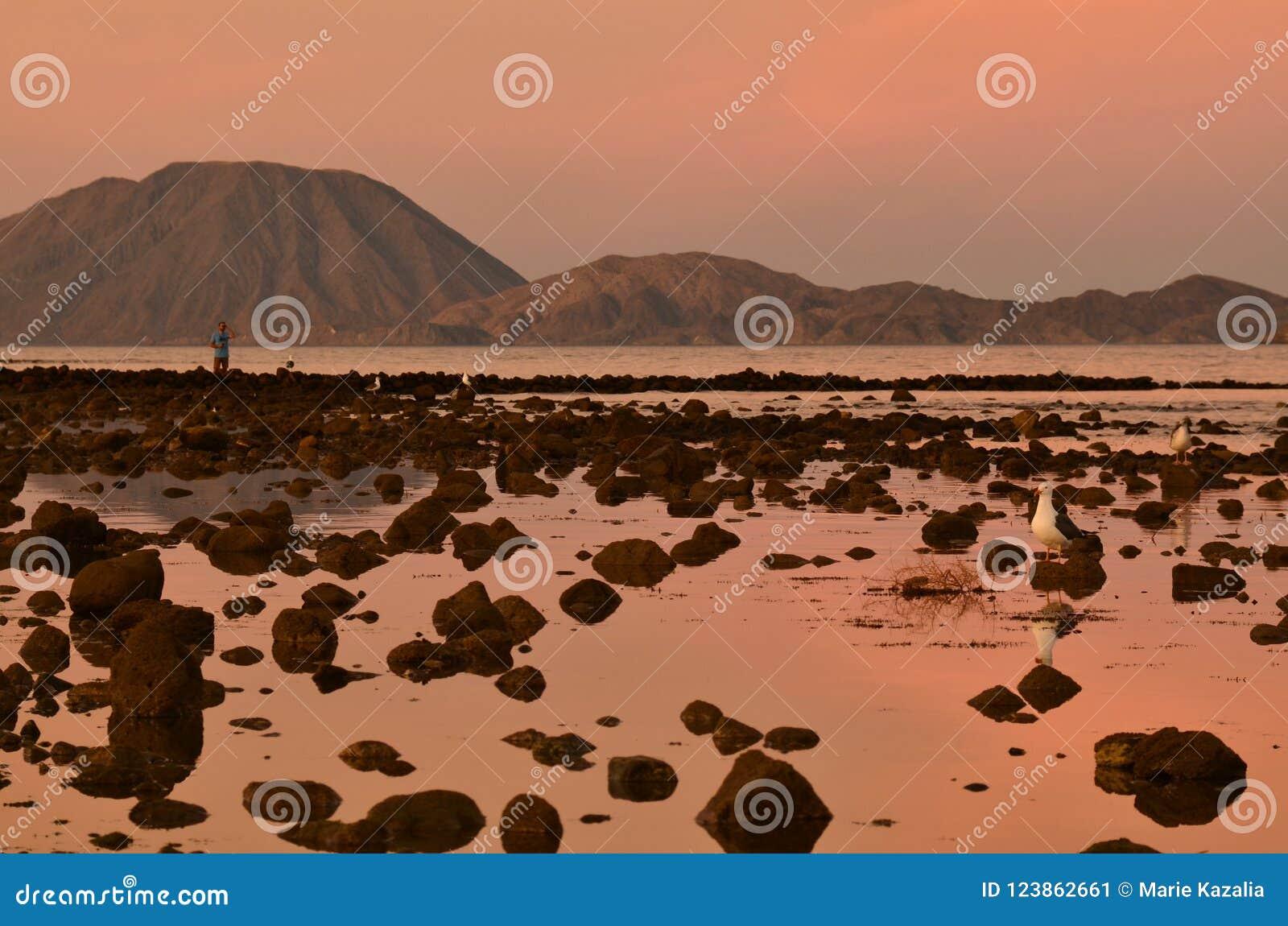 Rosa soluppgånghimmel reflekterade i den steniga vattenkusten, den ensliga mannen som använder kikare, lågvatten Bahia Los Angele
