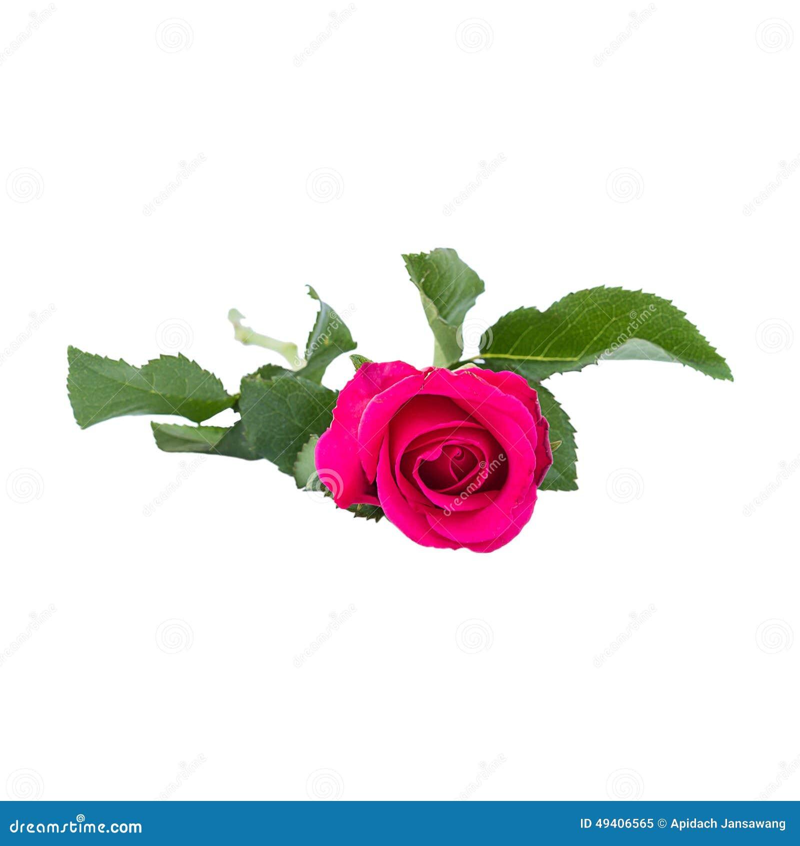 Download Rosa Stieg Auf Weißen Hintergrund Stockbild - Bild von hintergründe, schönheit: 49406565