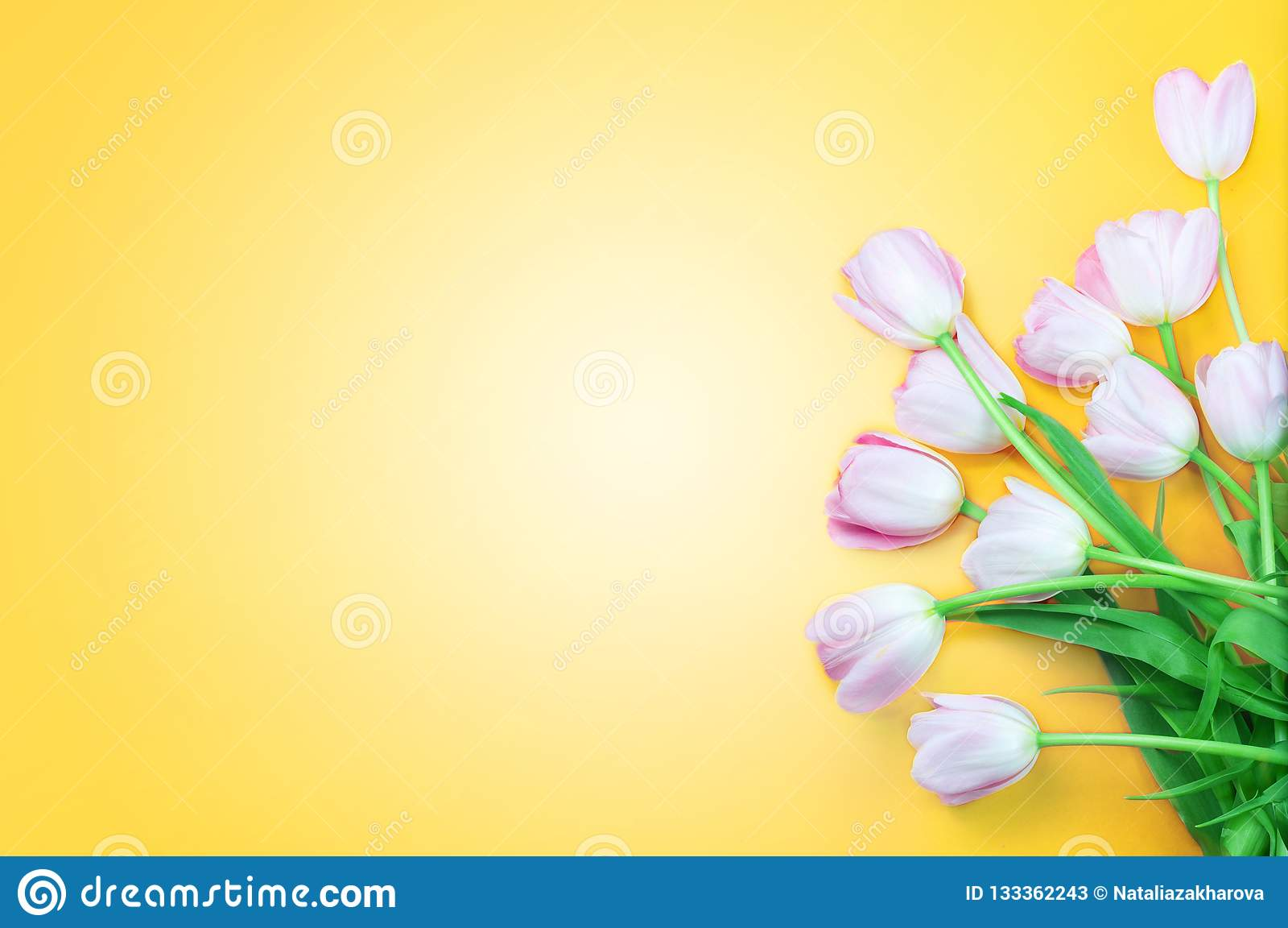 Rosa tulpanblommor på gul bakgrund Lycklig påsk, vår