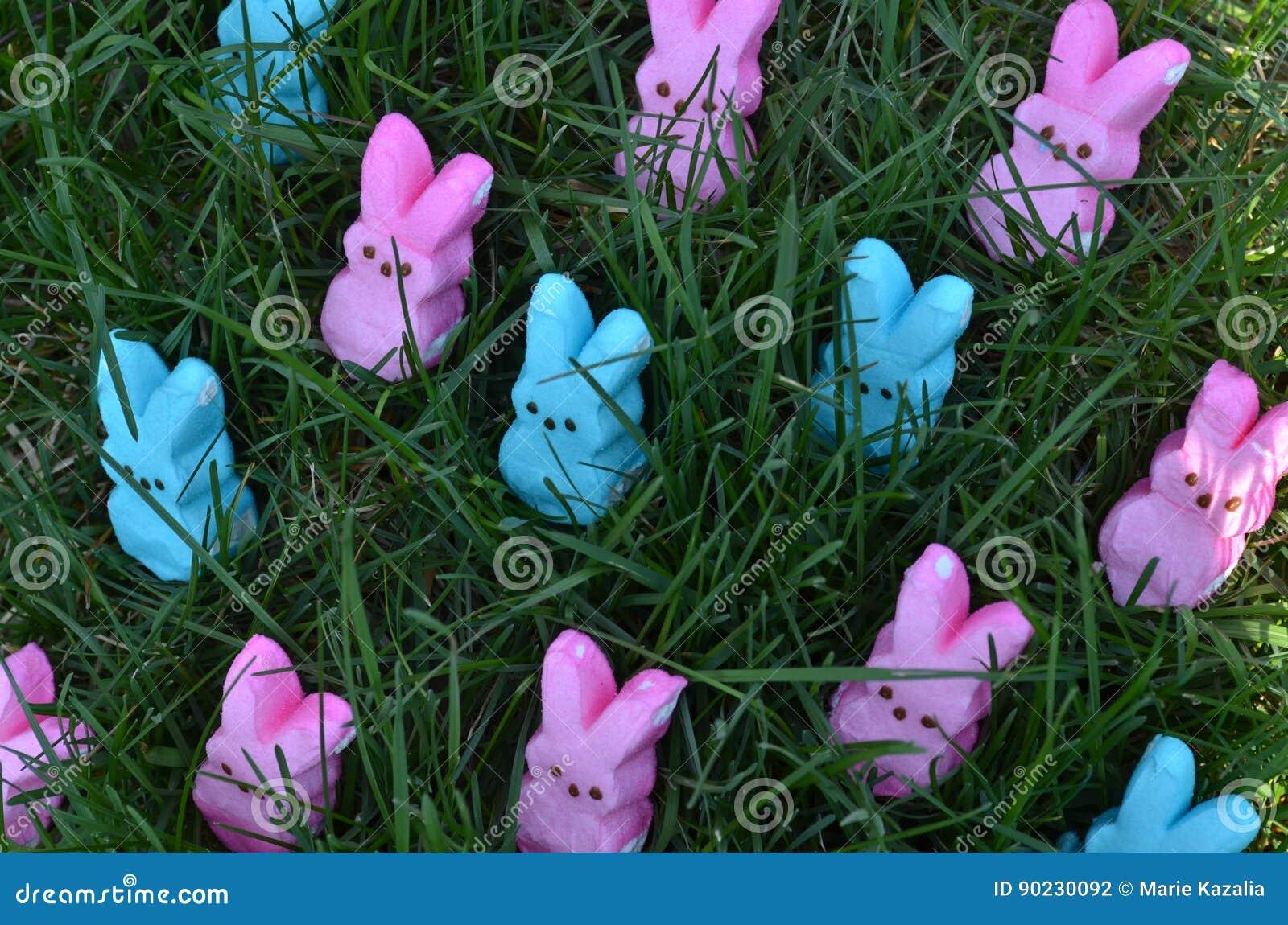 Rosa und blaue Ostern-Eibischkaninchen im grünen Gras