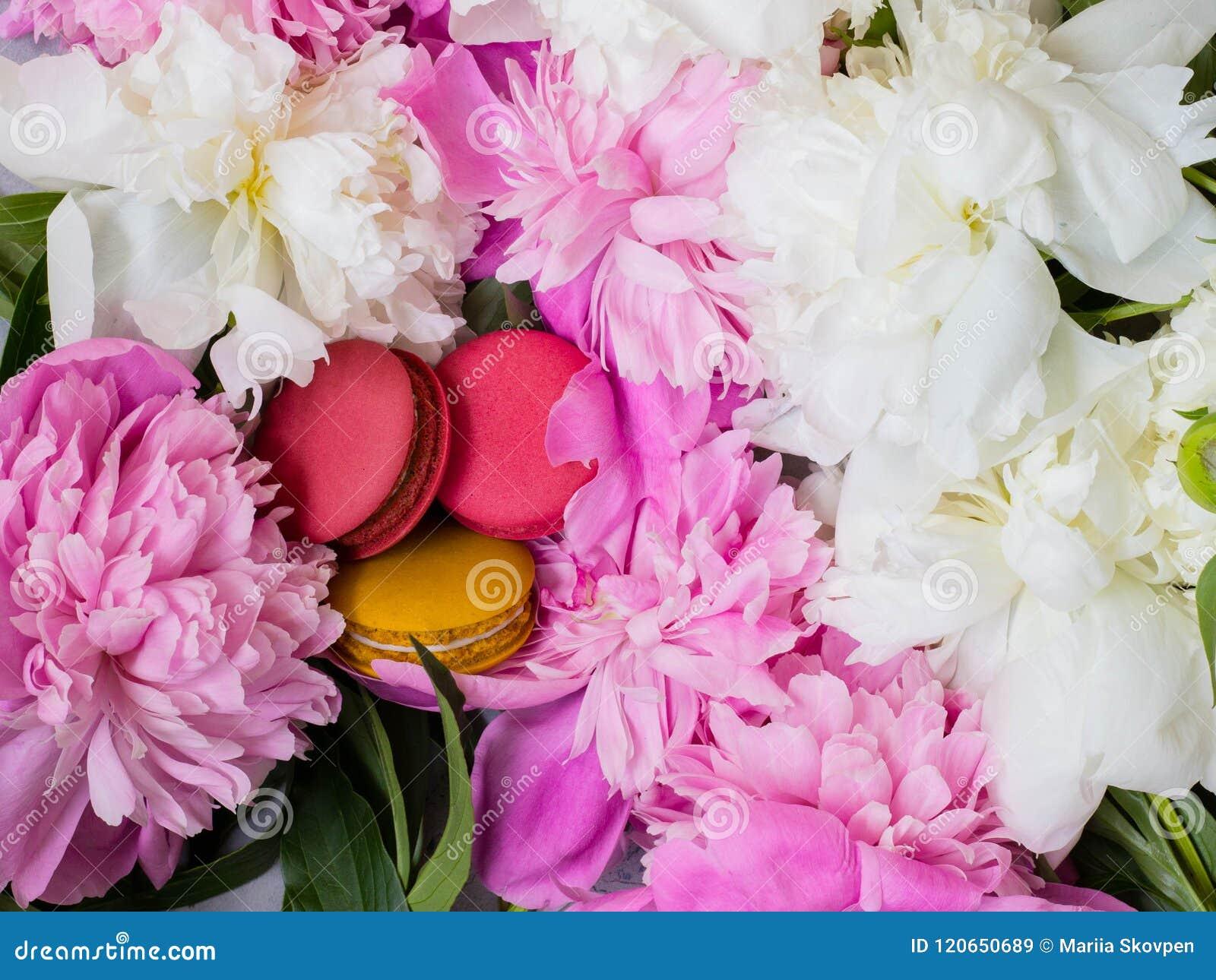 Rosa und gelbe Makronen auf Pfingstrosenhintergrund Rosa und weiße Pfingstrose und Makronen