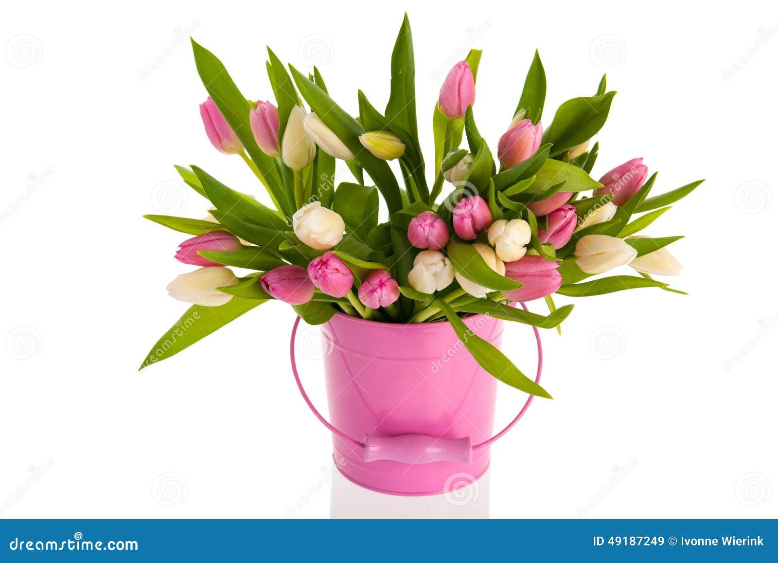rosa und wei e tulpen im eimer stockfoto bild 49187249. Black Bedroom Furniture Sets. Home Design Ideas