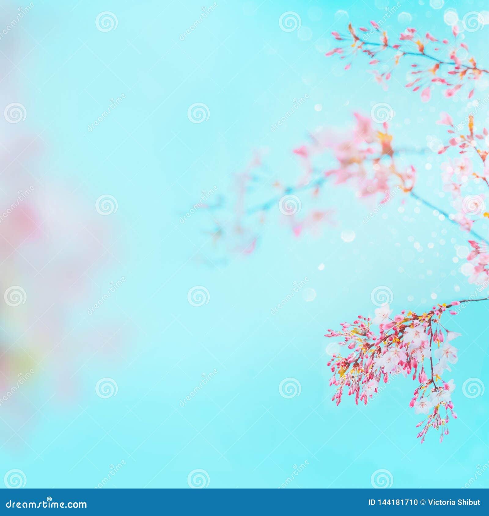 Rosa vårblomning av körsbäret på bakgrund för turkosblå himmel den blom- ramen inramniner serie vårnaturbakgrund