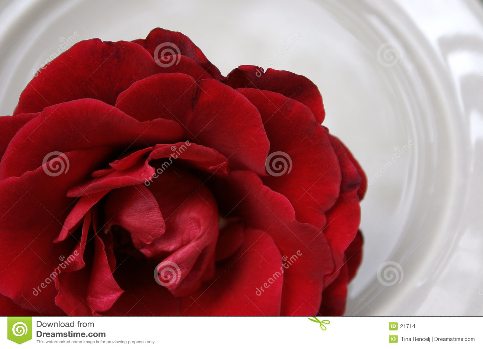 Rosa vermelha na porcelana