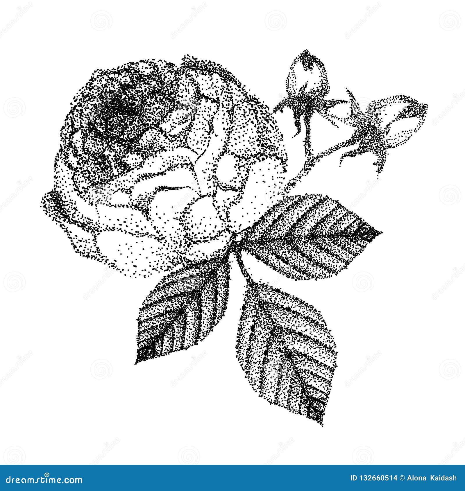 Rosa y hojas blancos y negros hermosas del ramo