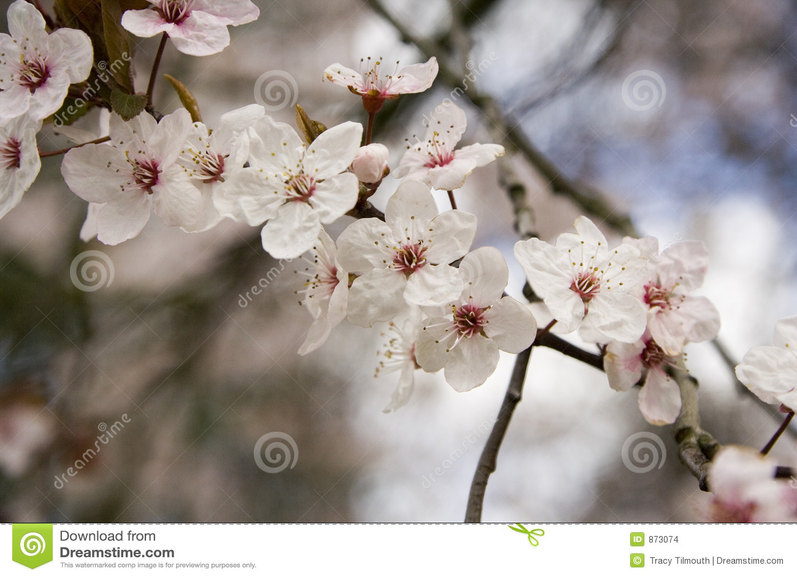 Rosafarbene Blüte