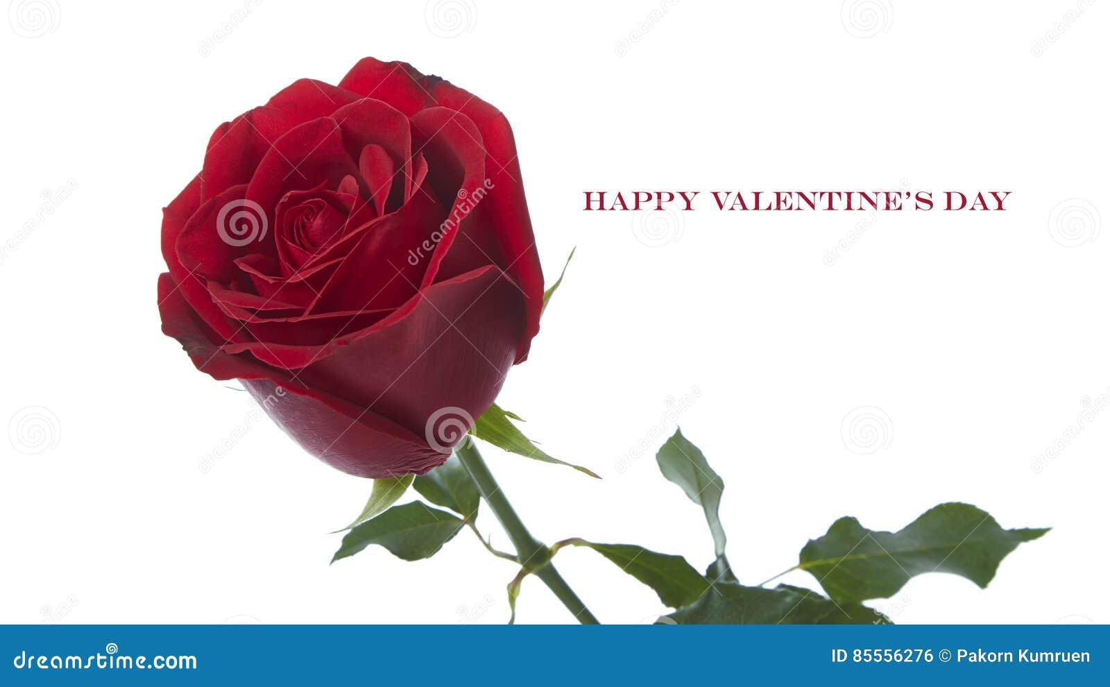 Rosafarbene Blume des Rotes
