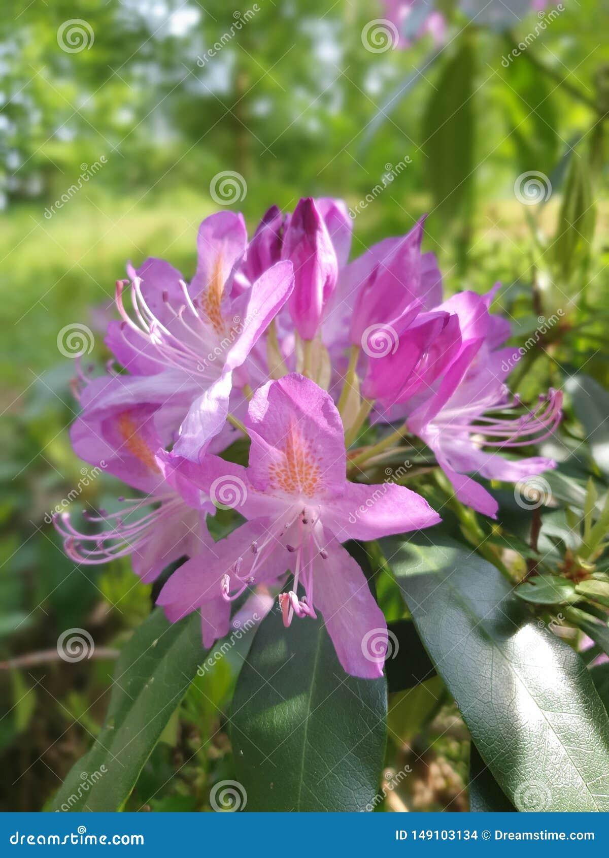 Rosafarbene Blume im Garten