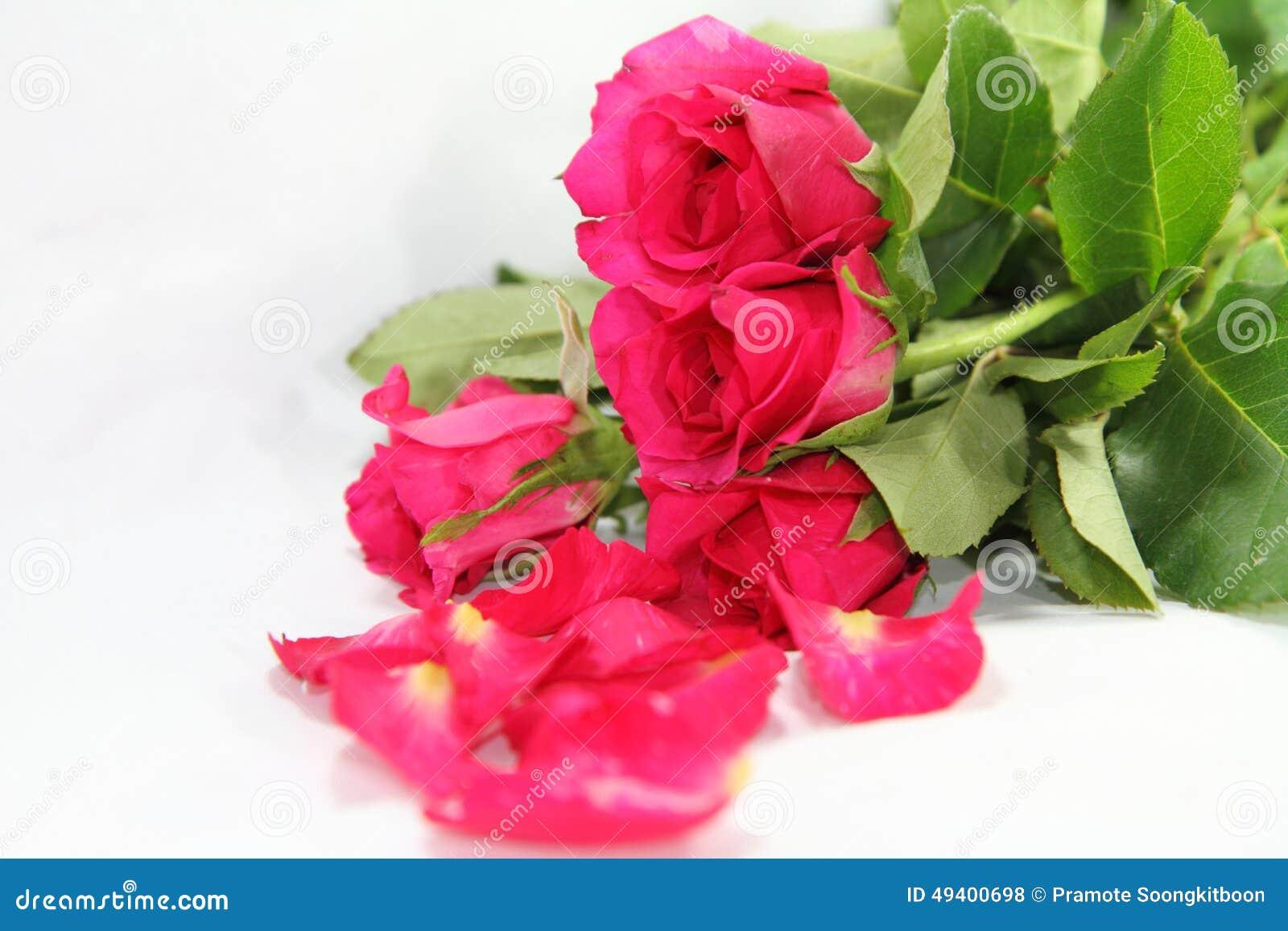 Download Rosafarbene Rosen stockfoto. Bild von feier, frisch, feiertage - 49400698