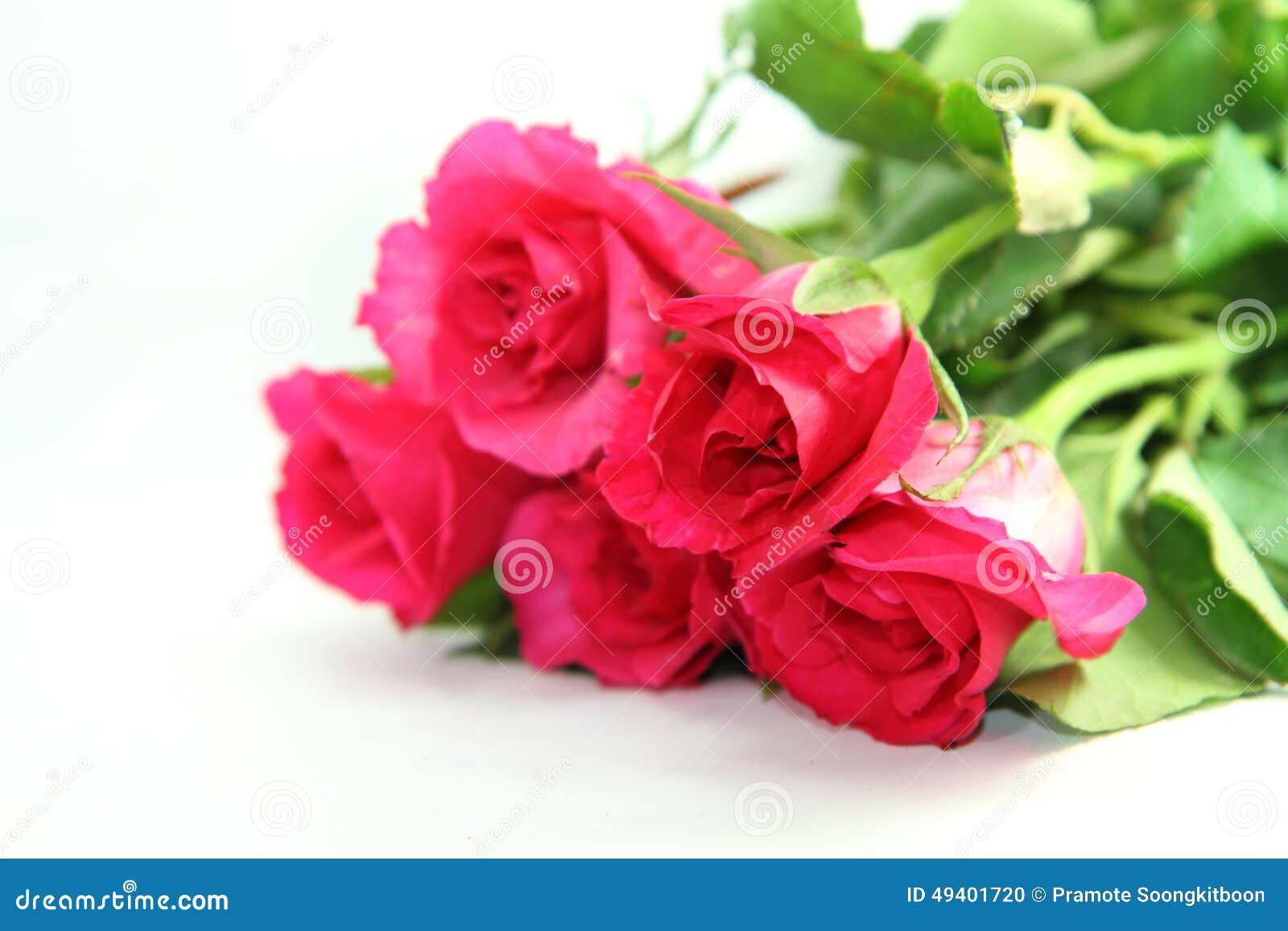 Download Rosafarbene Rosen stockfoto. Bild von grün, liebe, hintergründe - 49401720