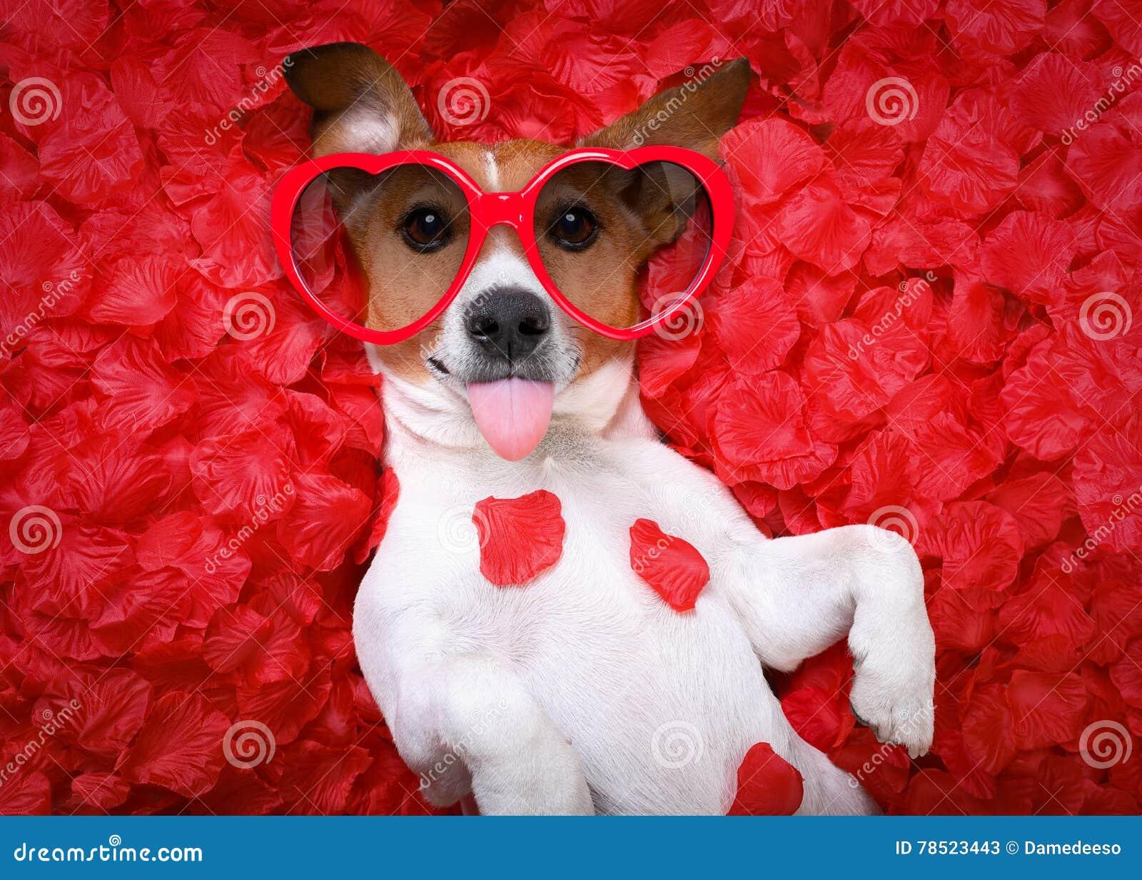 Rosafarbene Valentinsgrüße der Hundeliebe