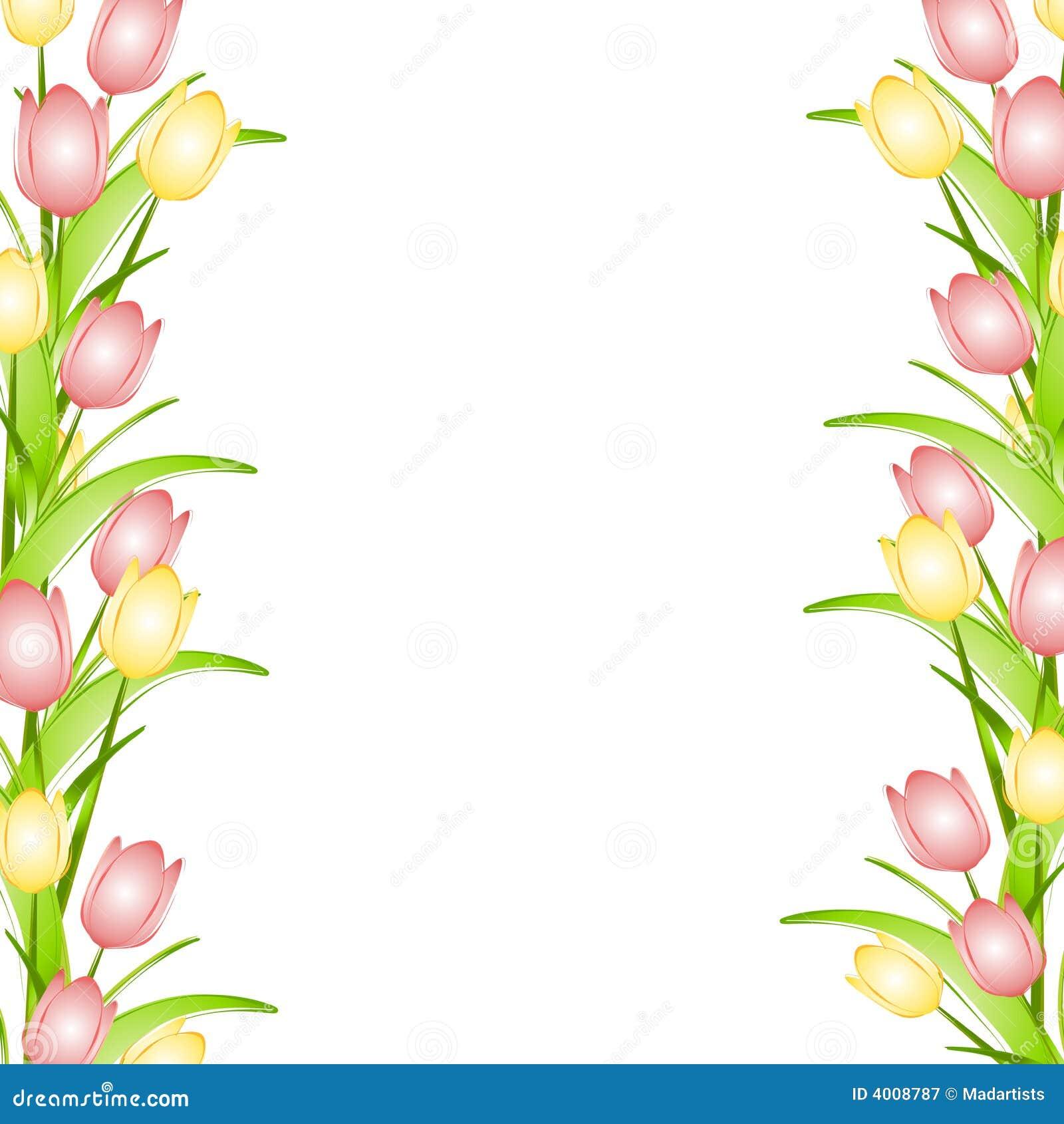 Rosafarbener gelber Frühlings-Tulpe-Blumen-Rand