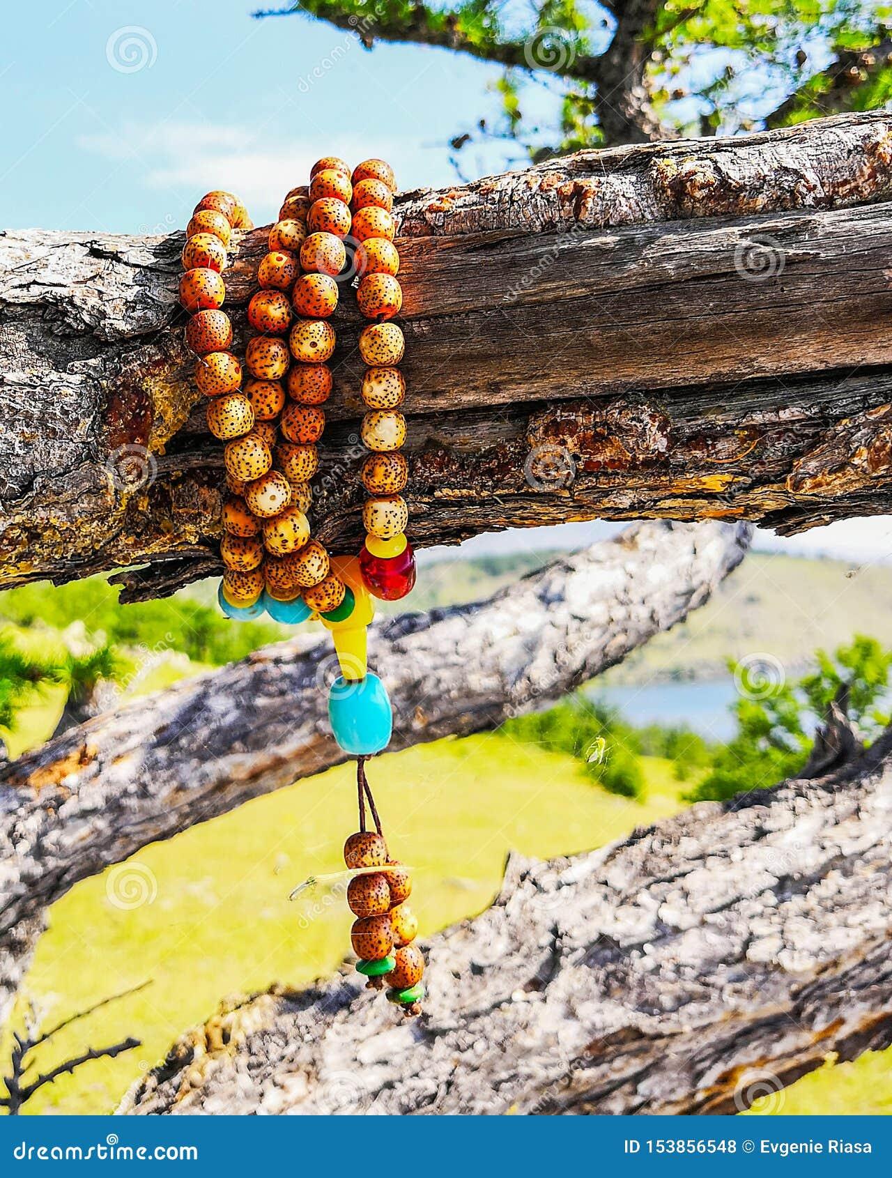 Rosario di legno che appende sull albero rosario di legno su un ramo del pino