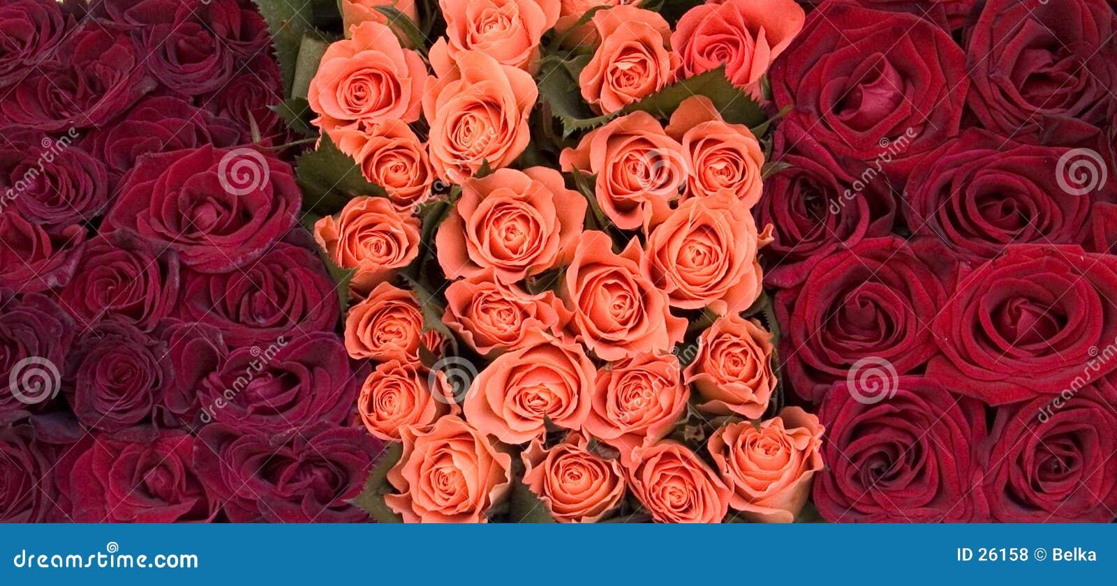 Download Rosas foto de archivo. Imagen de pétalo, rose, pétalos, manojo - 26158