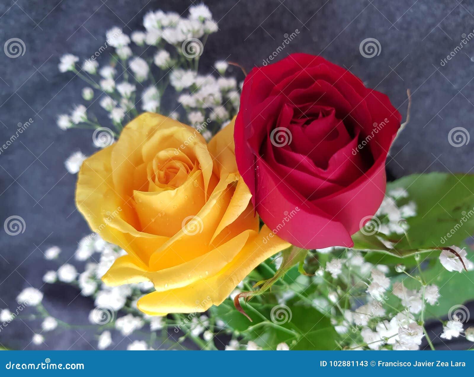 Rosas Amarelas E Vermelhas Imagem De Stock Imagem De Celebration