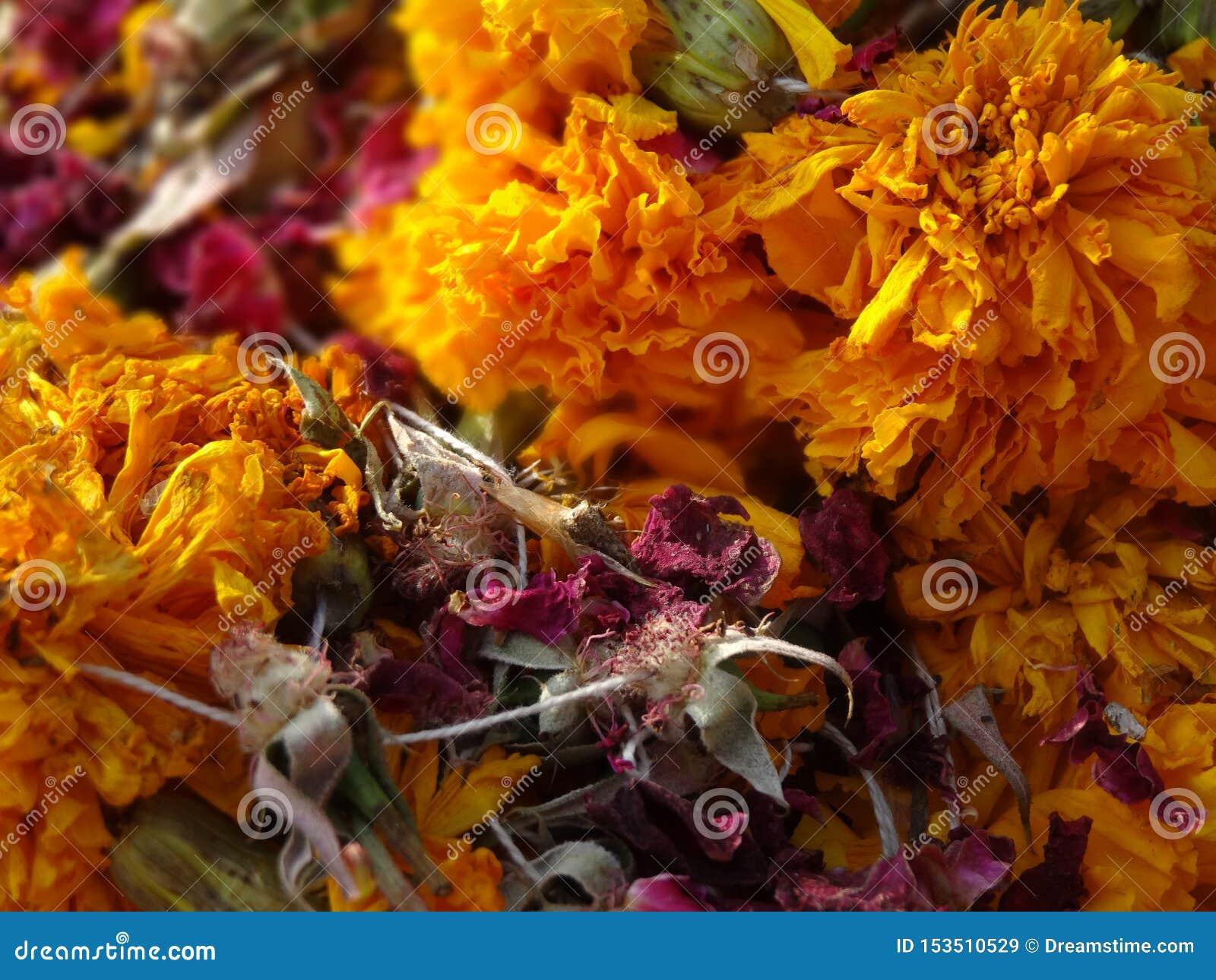 Rosas amarelas e vermelhas dispersadas