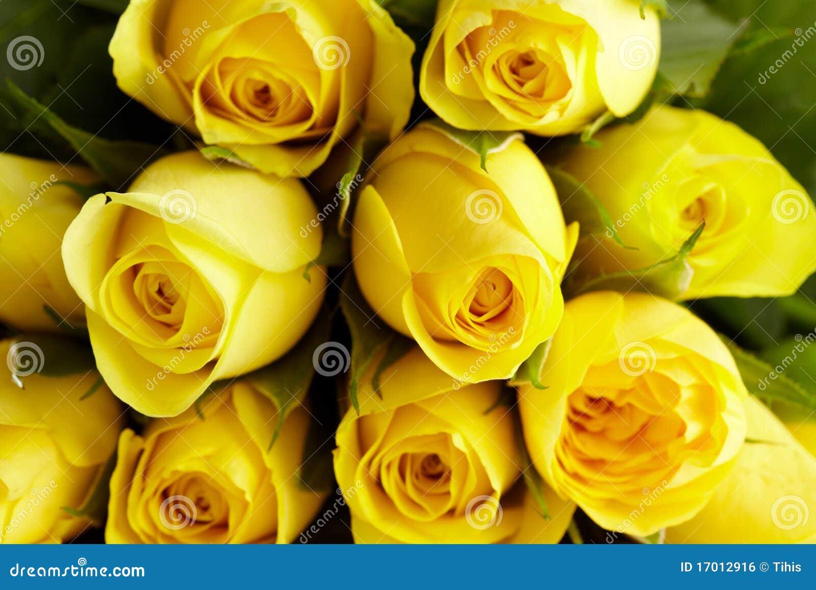 jardim rosas amarelas : jardim rosas amarelas:rosas-amarelas-no-detalhe-17012916.jpg