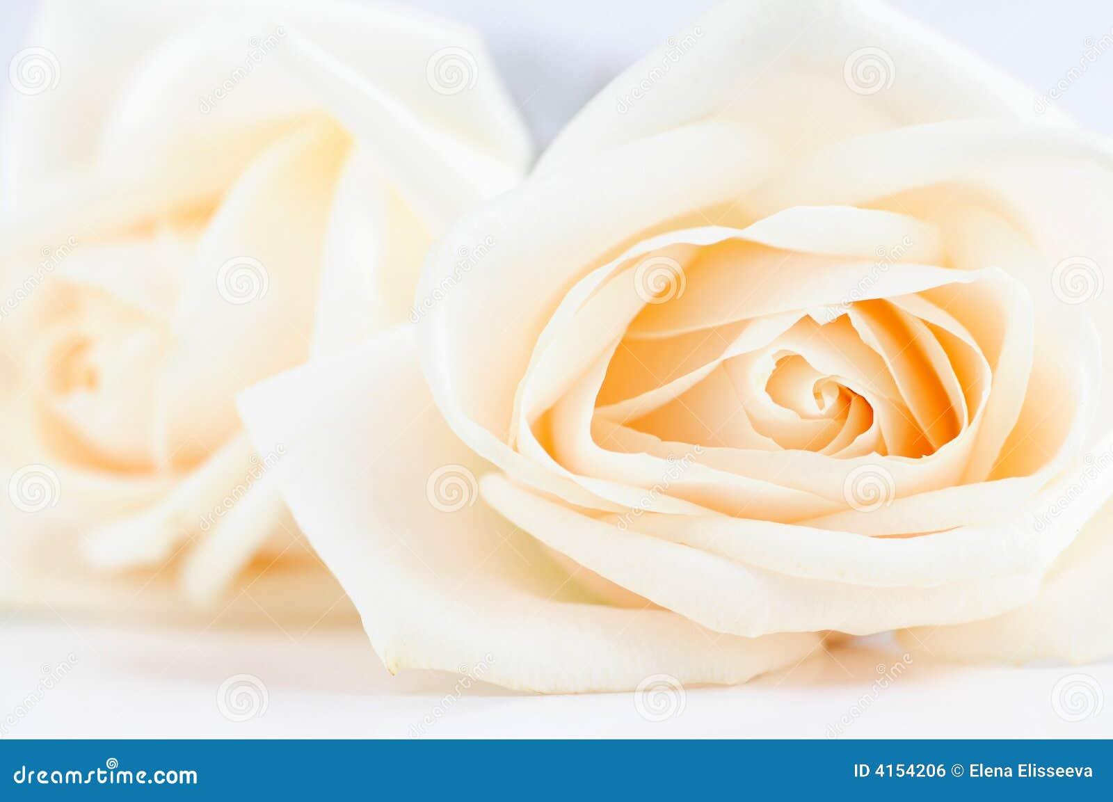 Rosas amarillentas delicadas