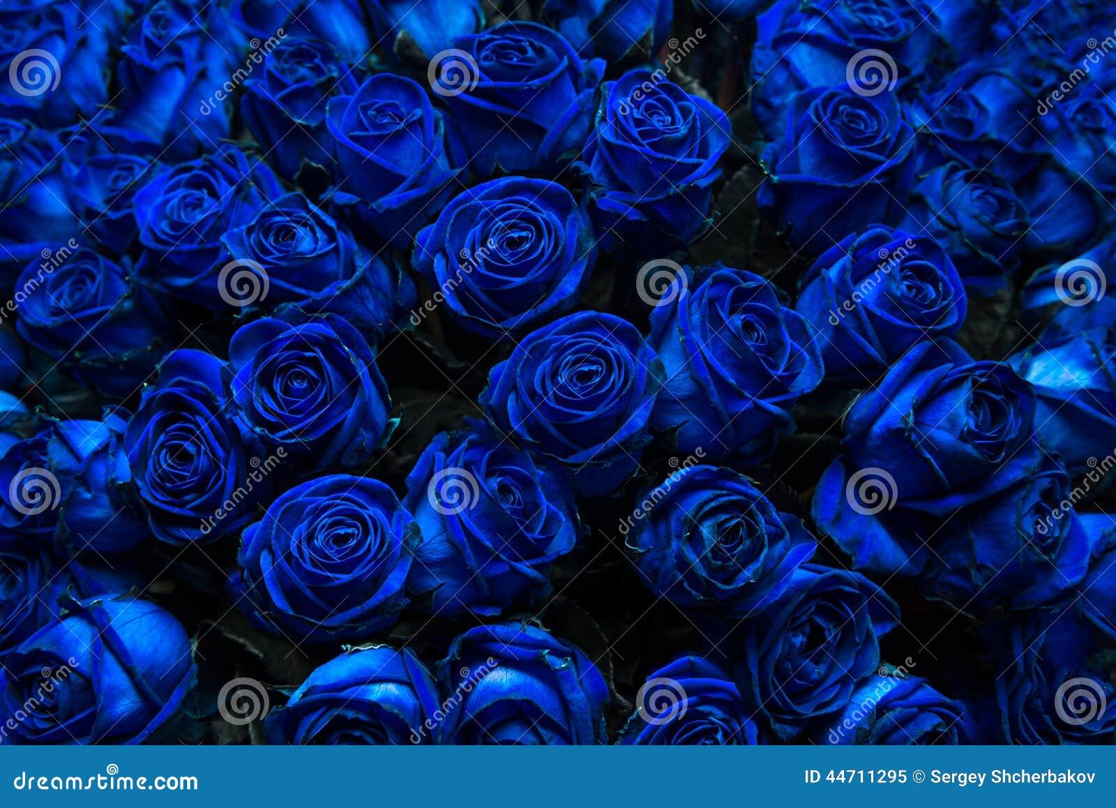 Rosas Azules Imagen De Archivo Imagen De Corte Flora 44711295