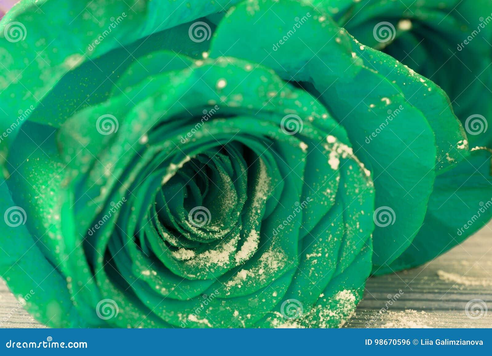 Rosas Azules Hermosas Foto De Archivo Imagen De Amor 98670596