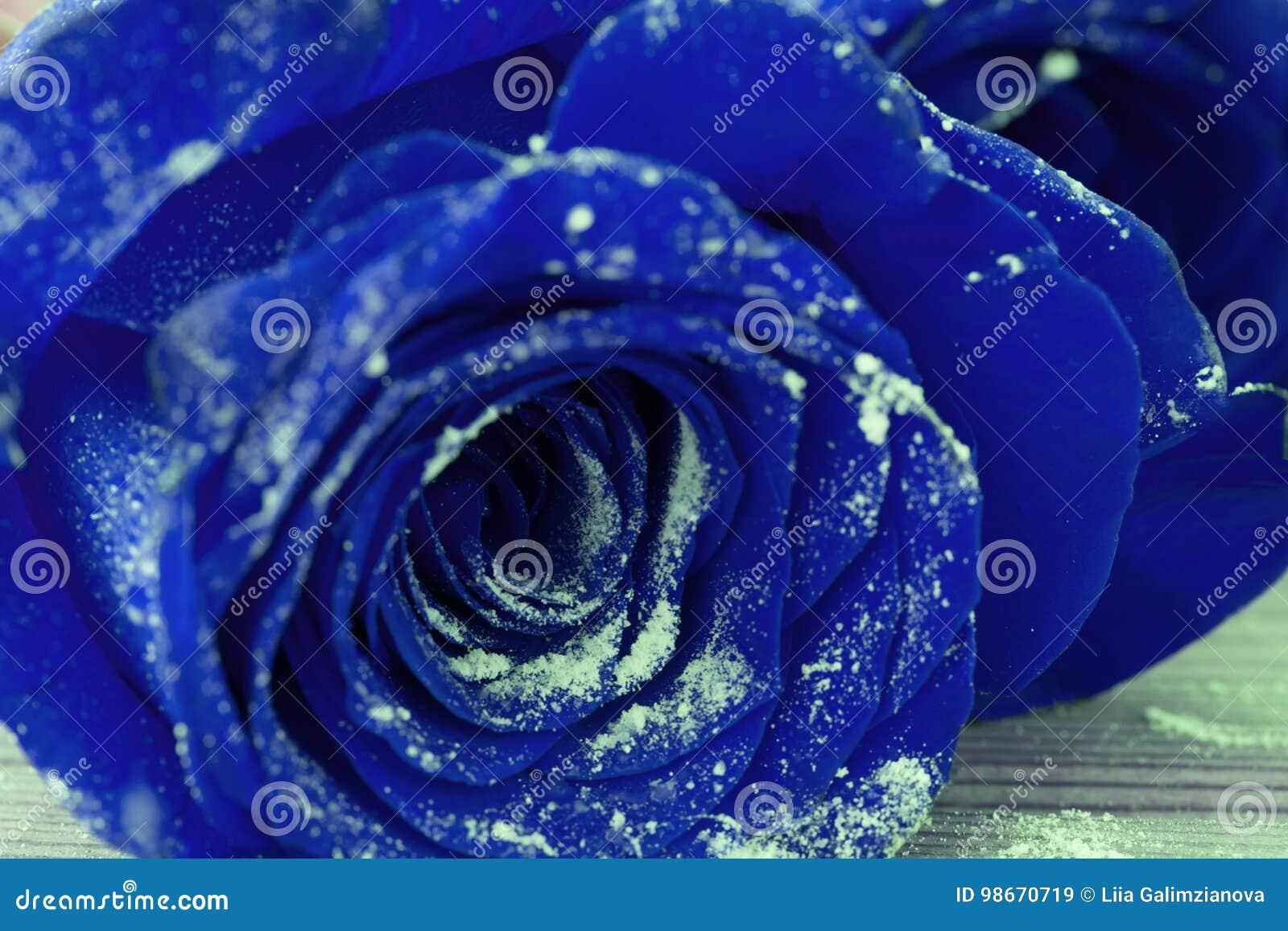Rosas Azules Hermosas Imagen De Archivo Imagen De Celebración