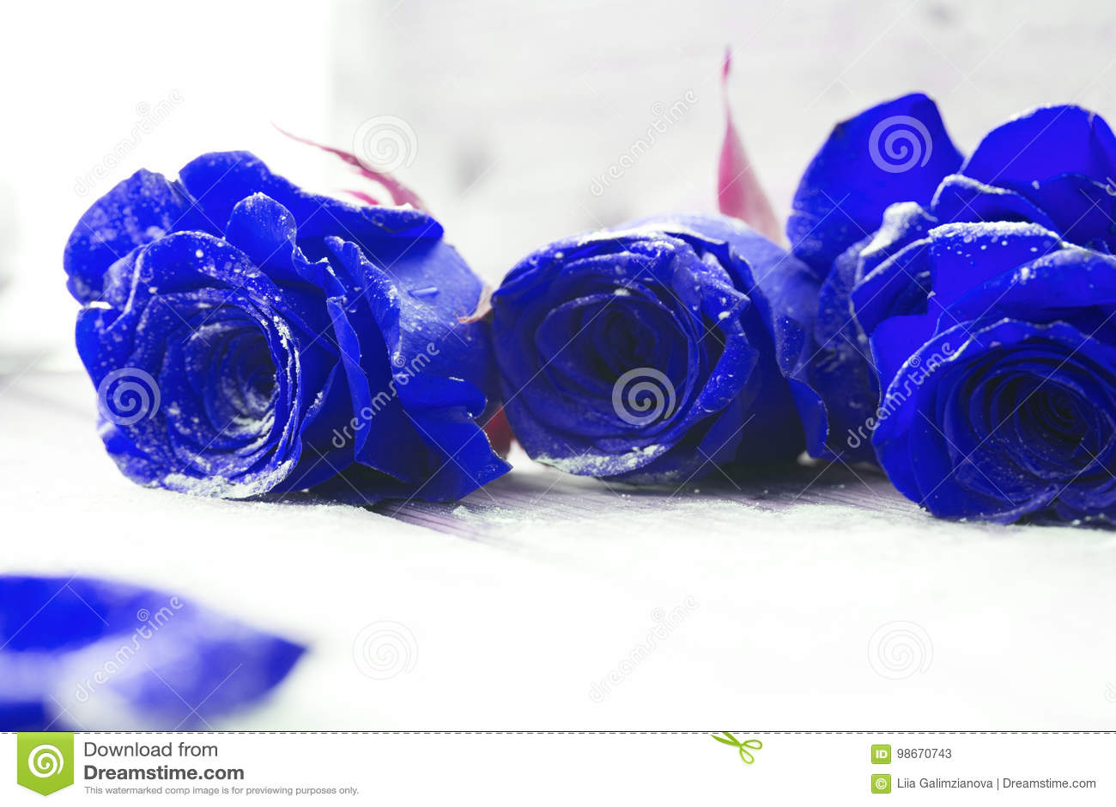 Rosas Azules Hermosas Imagen De Archivo Imagen De Ramo 98670743