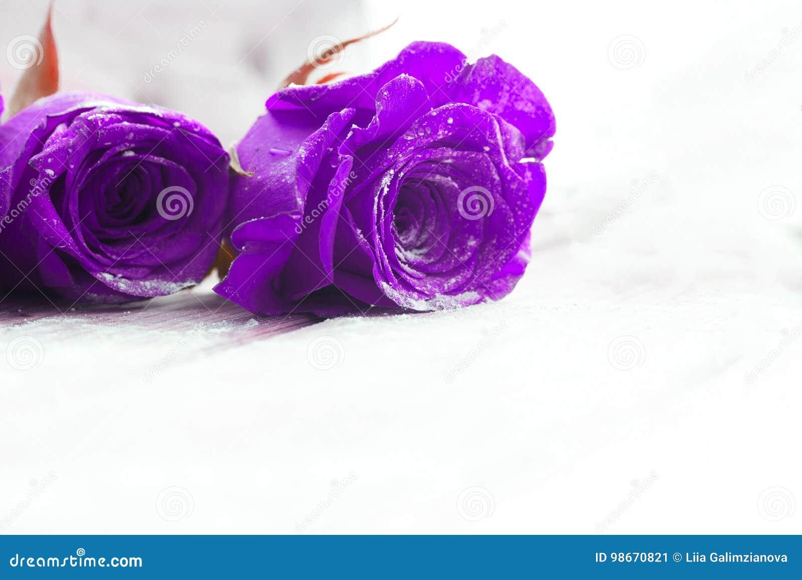 Rosas Azules Hermosas Imagen De Archivo Imagen De Encanto 98670821