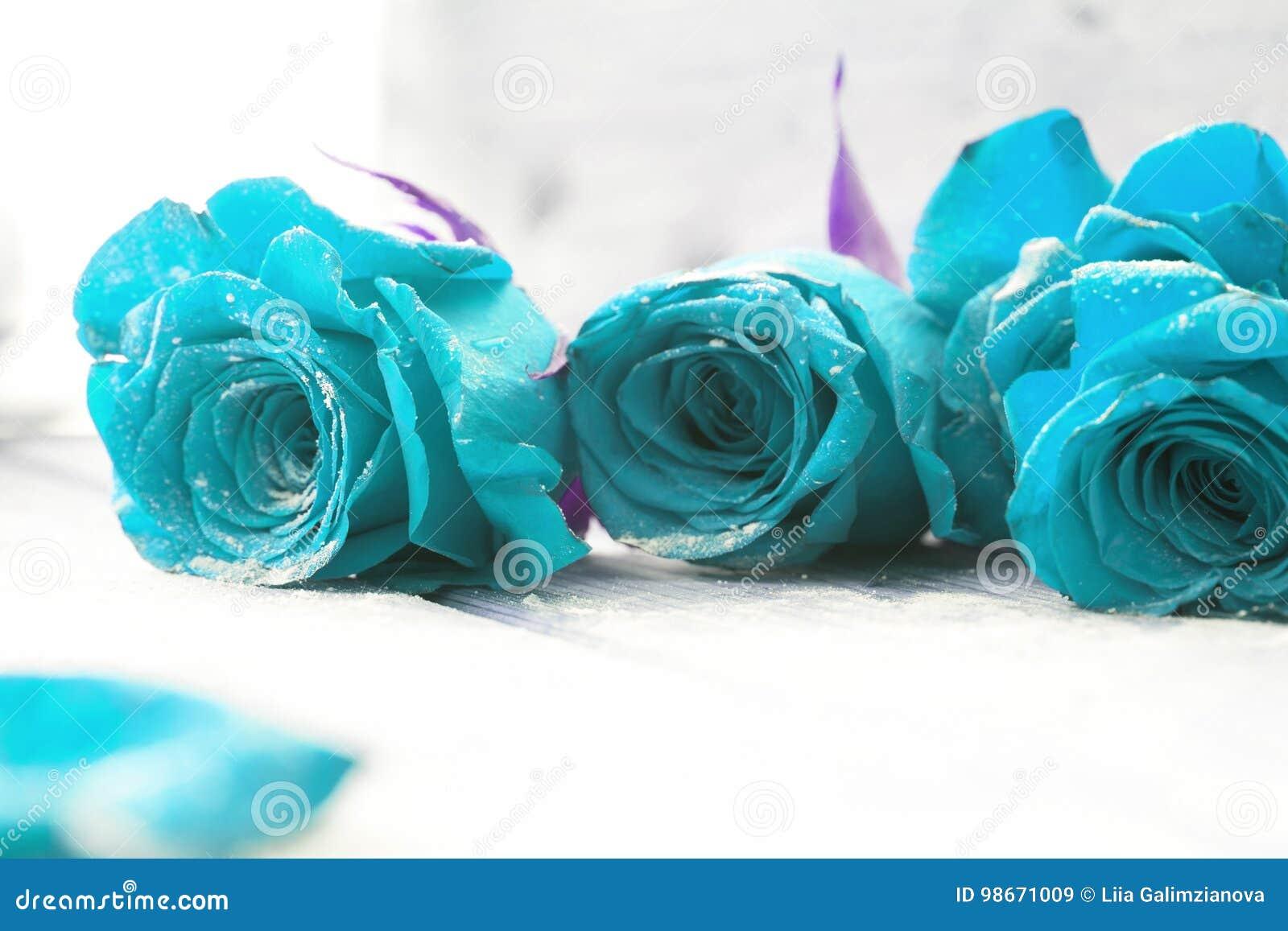 Rosas Azules Hermosas Imagen De Archivo Imagen De Día 98671009