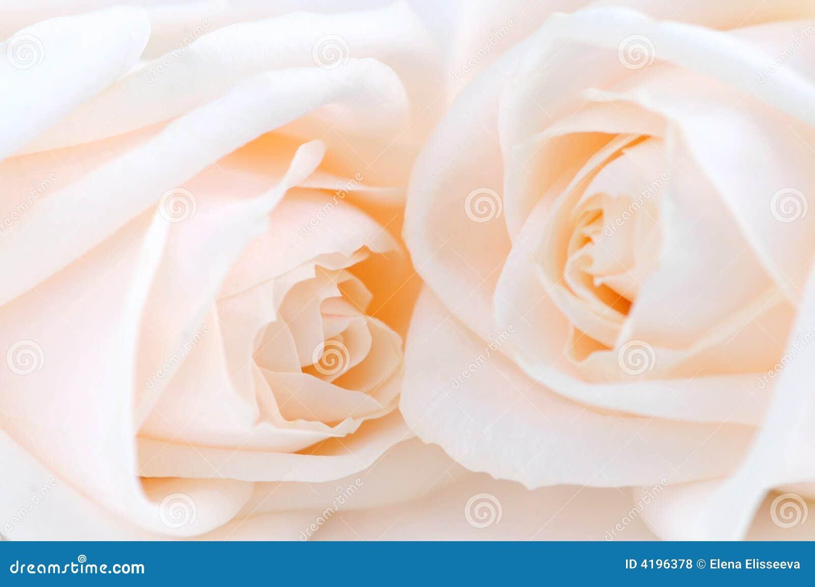 Rosas bege