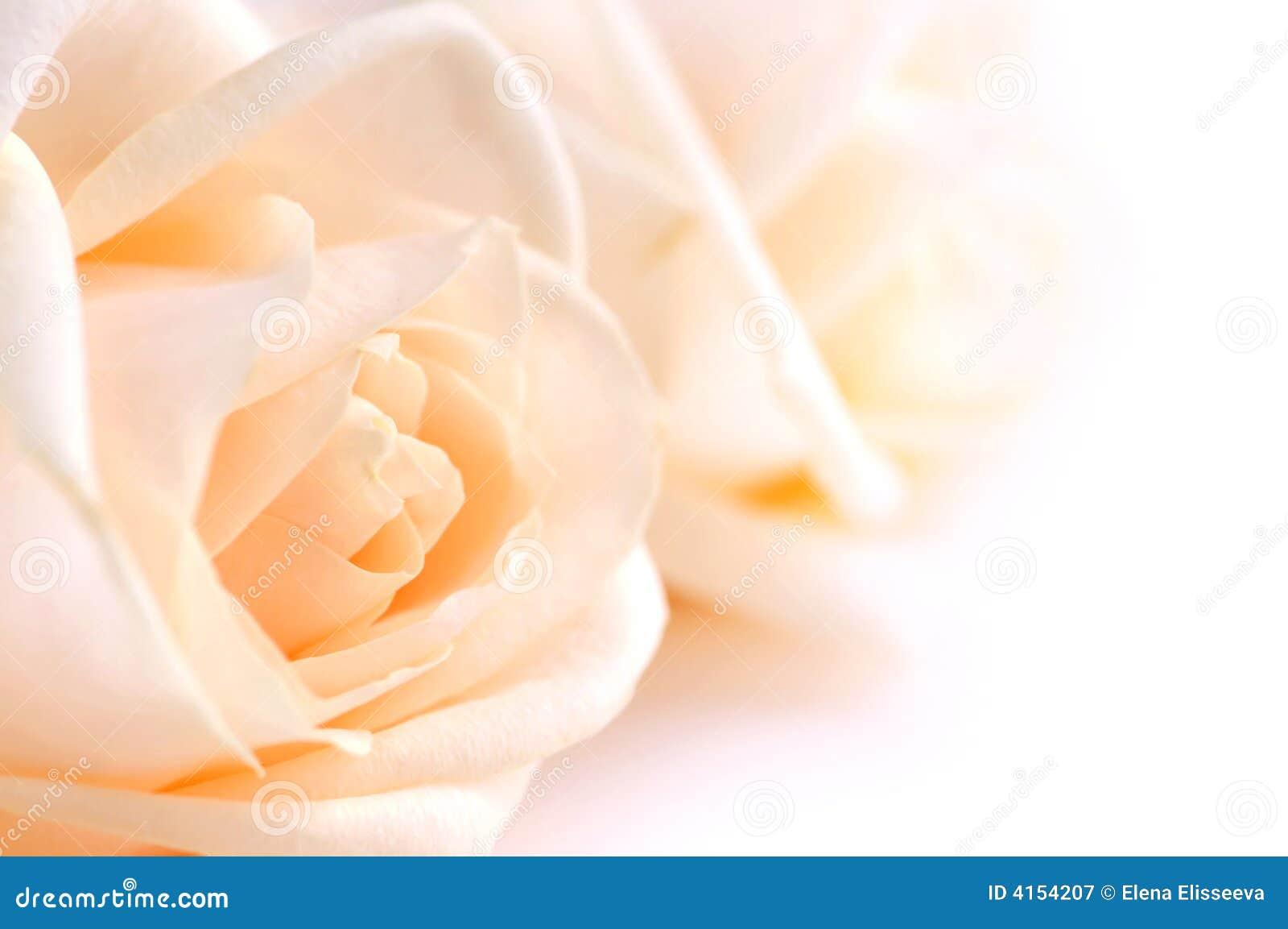 Rosas bege delicadas