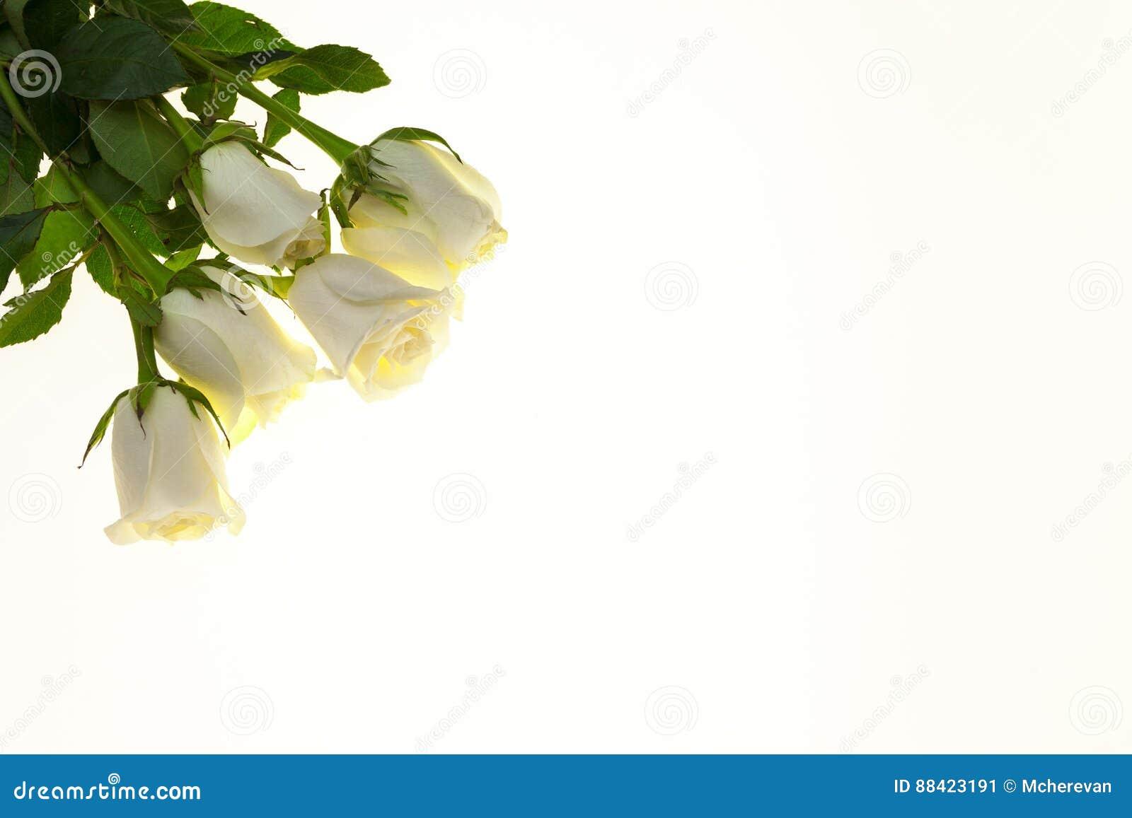 Rosas Blancas Hermosas En El Ramo, Fondo Para Las