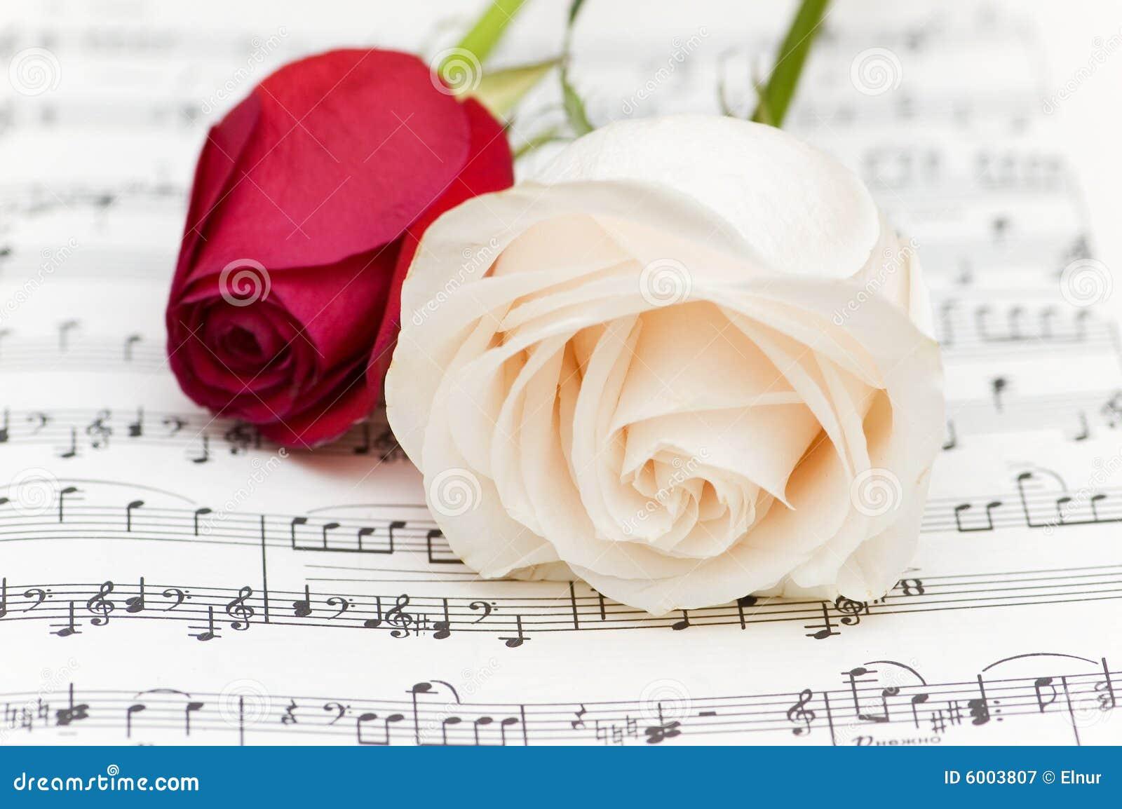Rosas Blancas Y Rojas Imagen De Archivo Imagen De Hoja 6003807