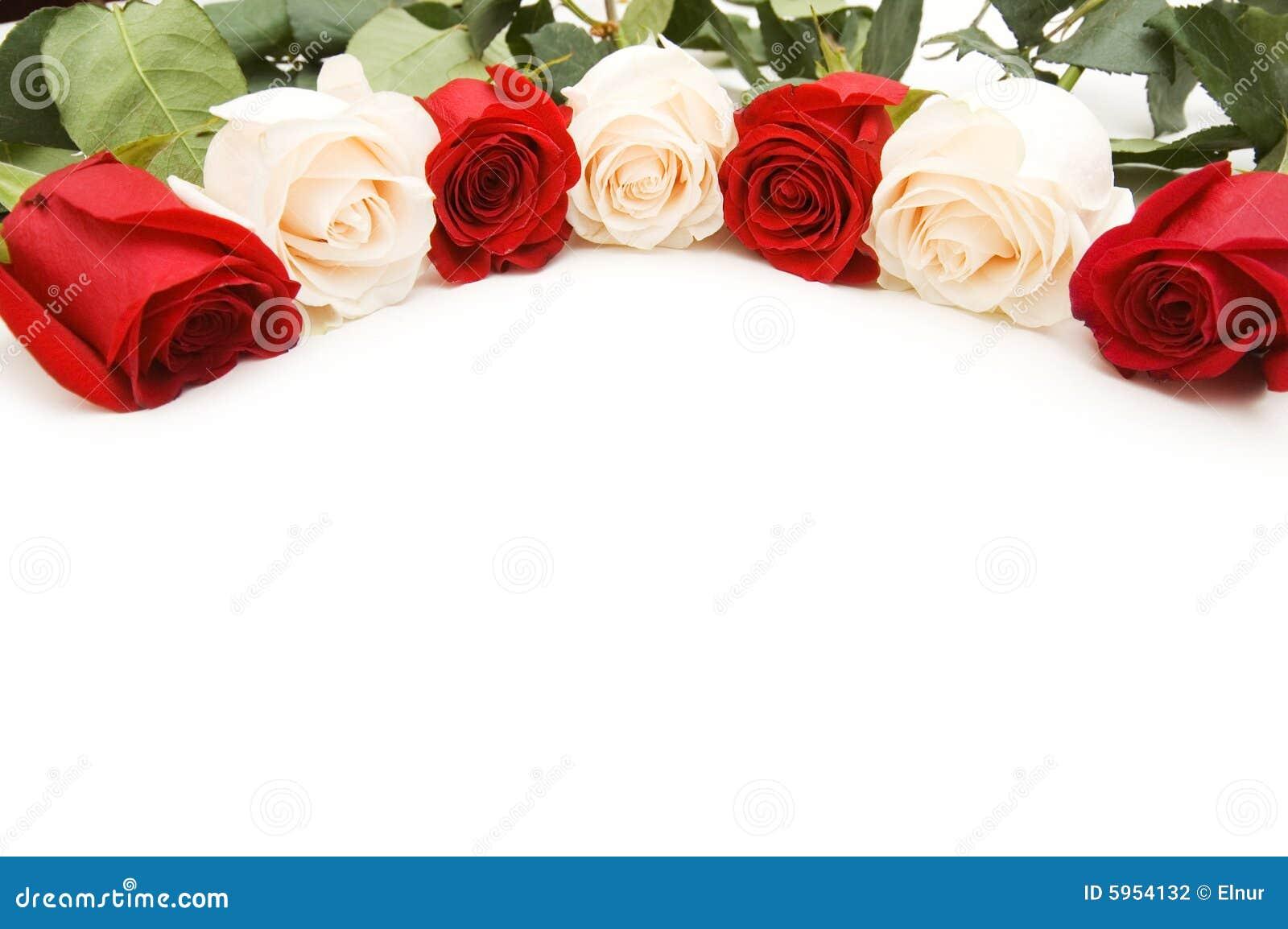 Imágenes Comunes Del Rosas Rojas Y Blancas Aisladas Los Derechos