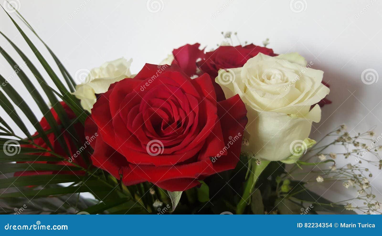 Rosas Blancas Y Rojas Flores Hermosas Foto De Archivo Imagen De