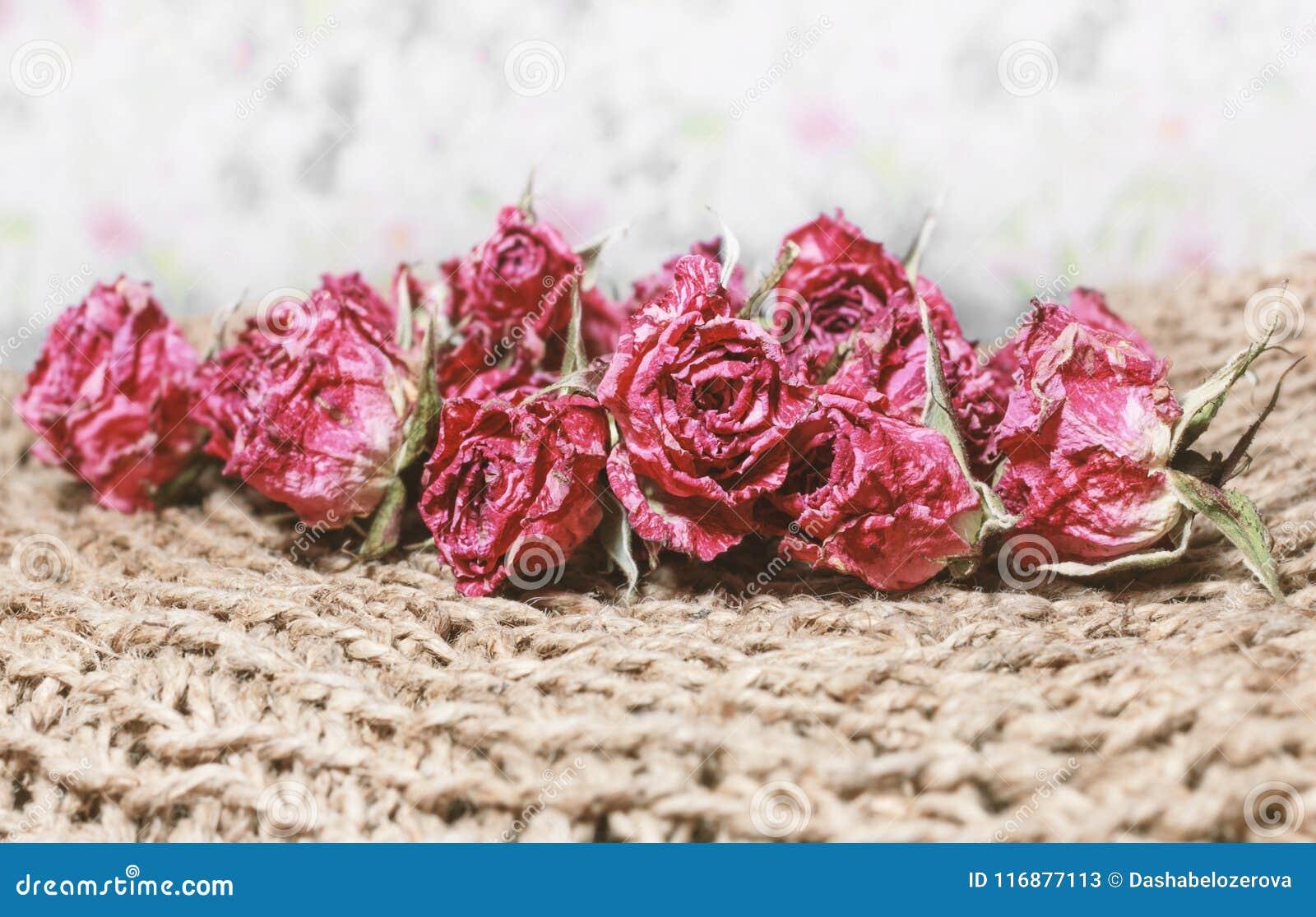 Rosas Bonitas Hermosas Rojas Secas Imagen De Archivo Imagen De