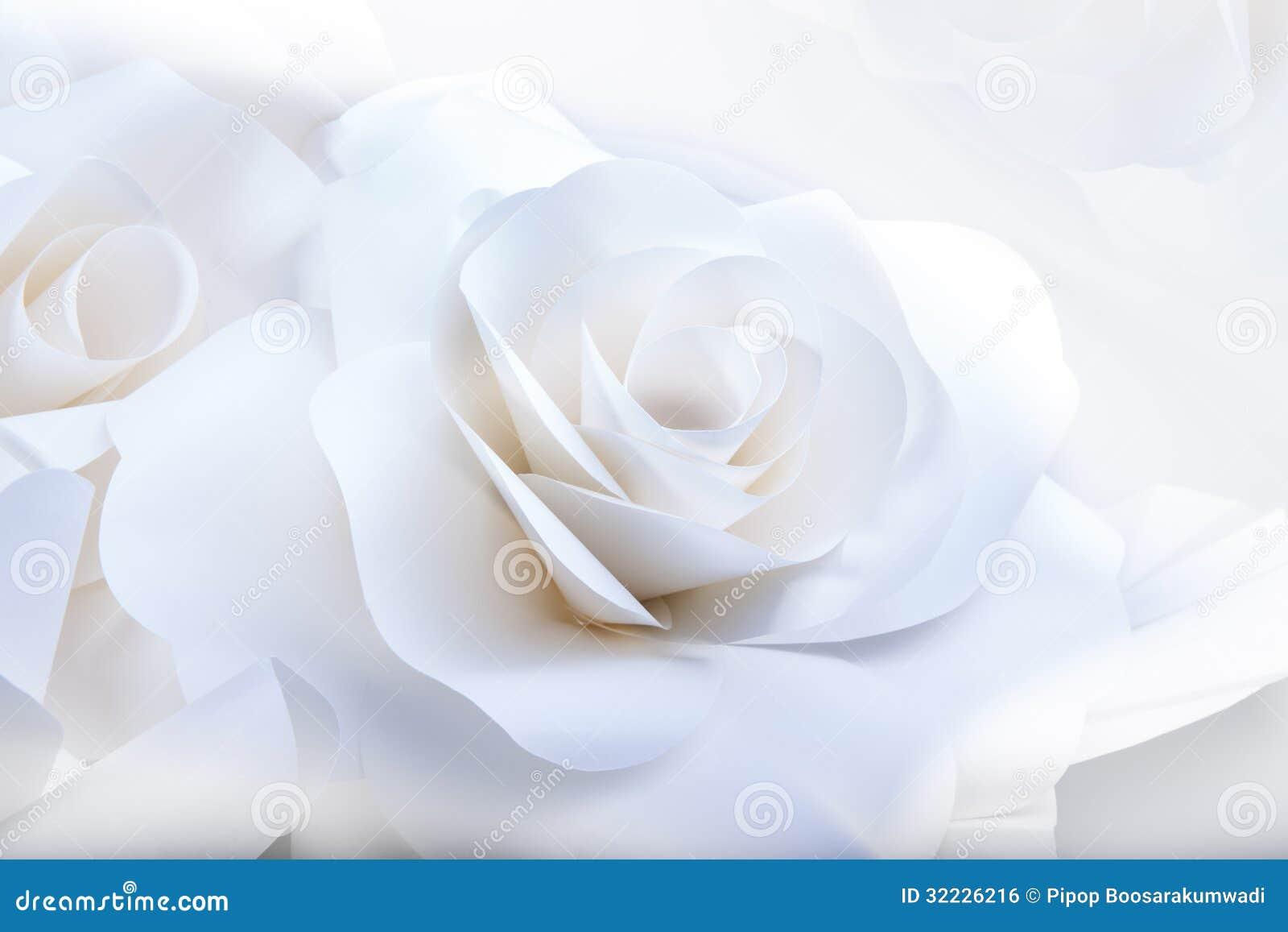 Download Rosas Brancas Bonitas No Fundo Branco. Foto de Stock - Imagem de ninguém, beleza: 32226216