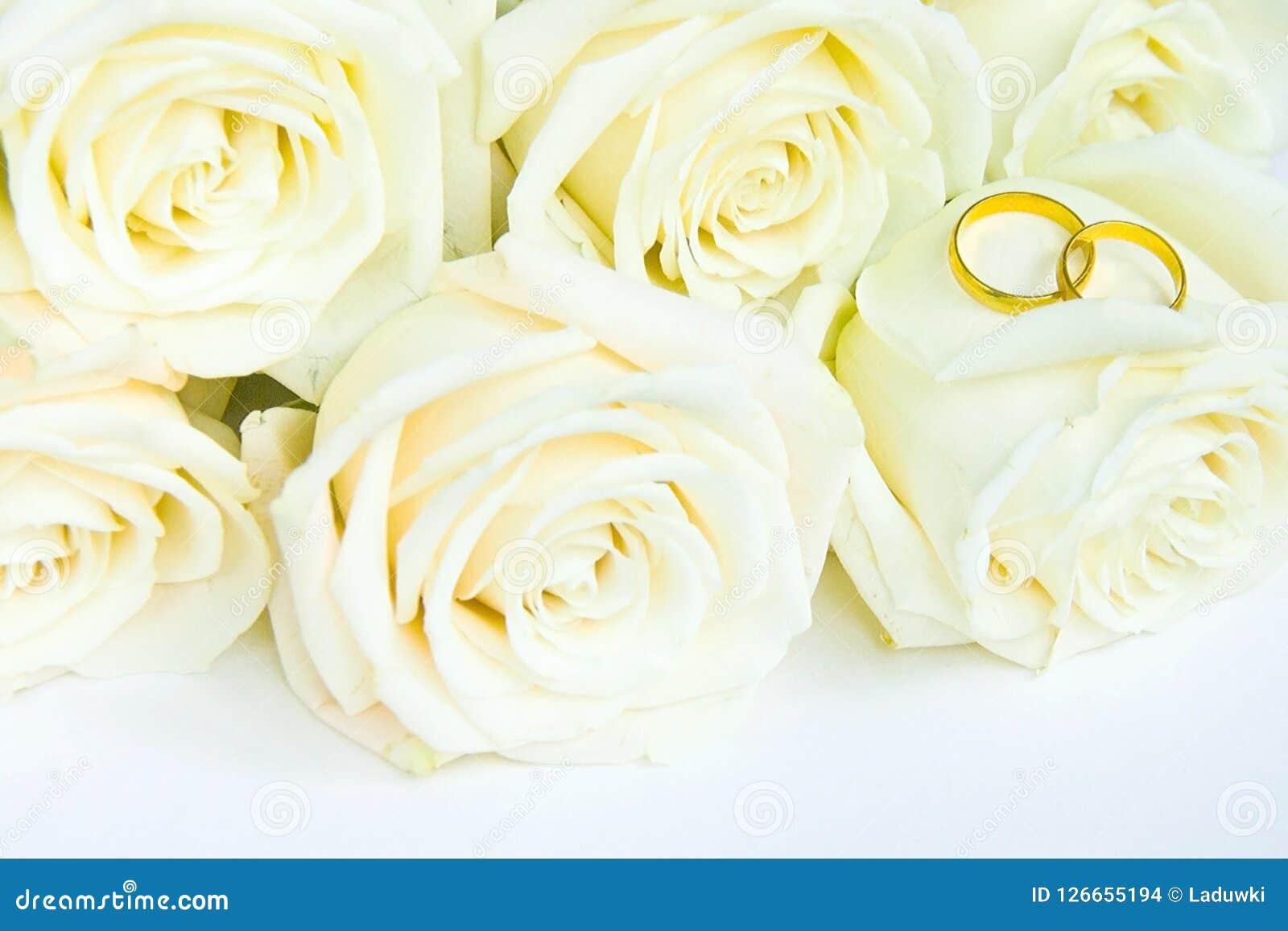 Rosas brancas frescas bonitas com anéis de ouro, conceito do casamento
