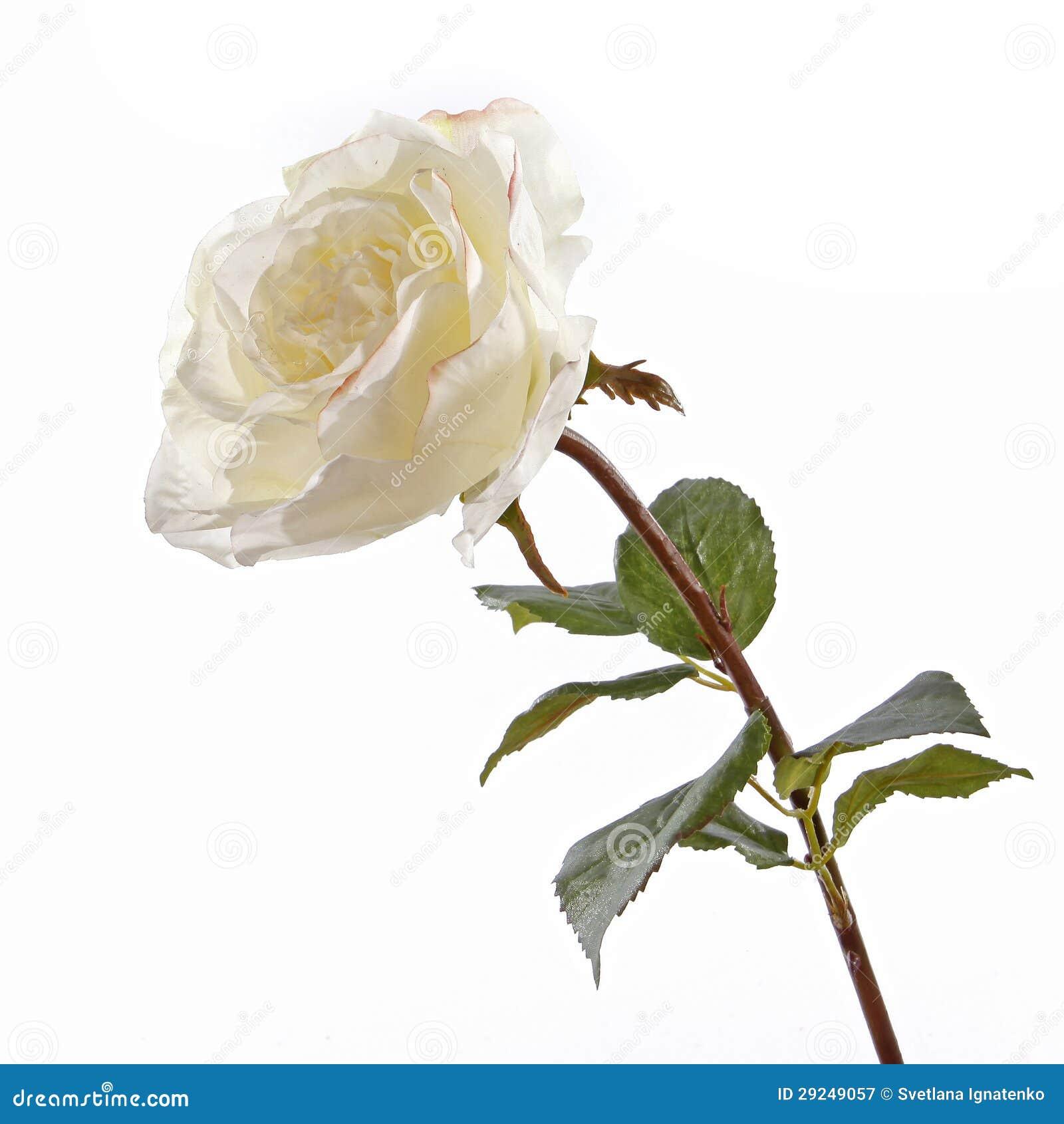Download Rosas Brancas Frescas Em Um Fundo Branco Imagem de Stock - Imagem de folha, florist: 29249057