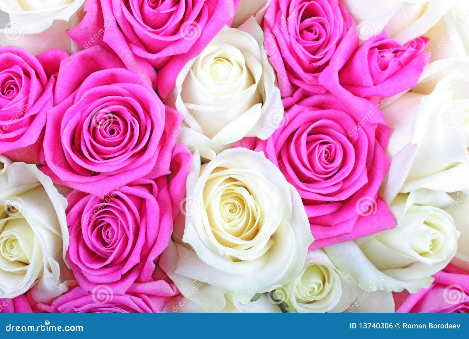 Rosas cor-de-rosa e brancas.