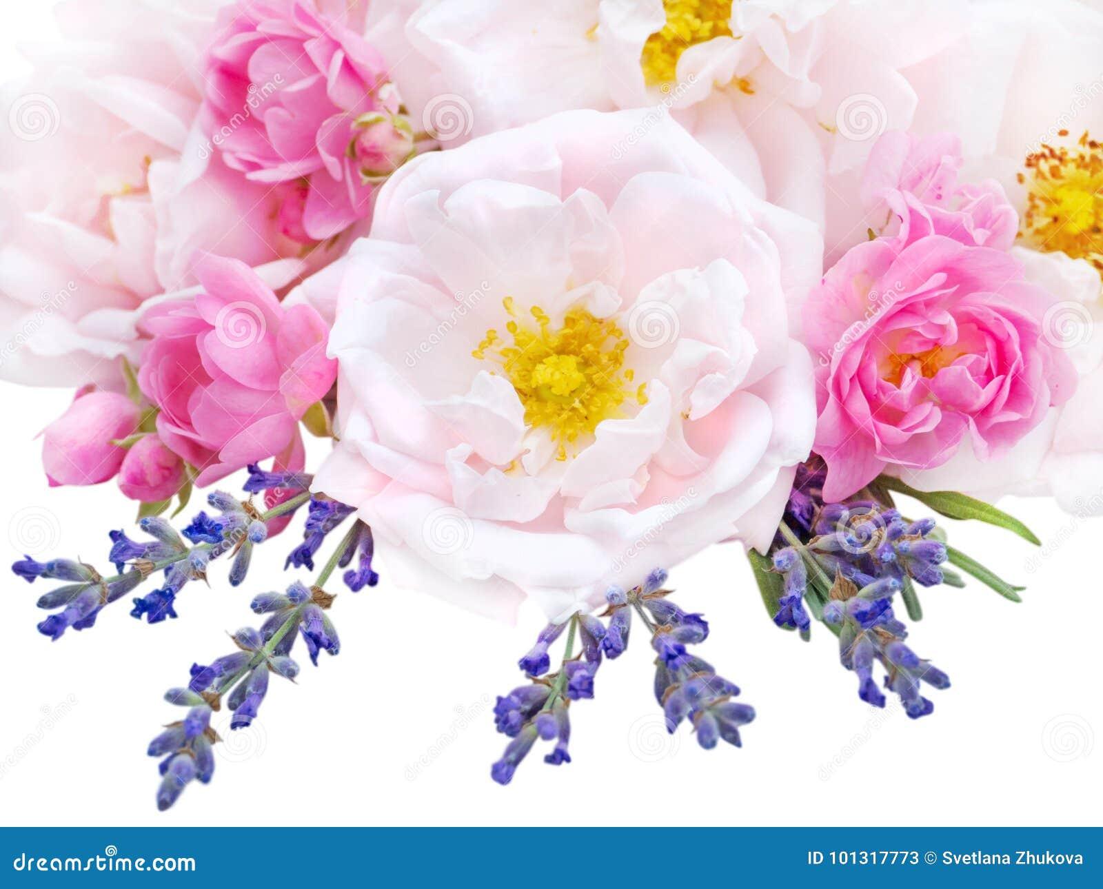 Rosas cor-de-rosa e ramalhete da alfazema isolado no branco