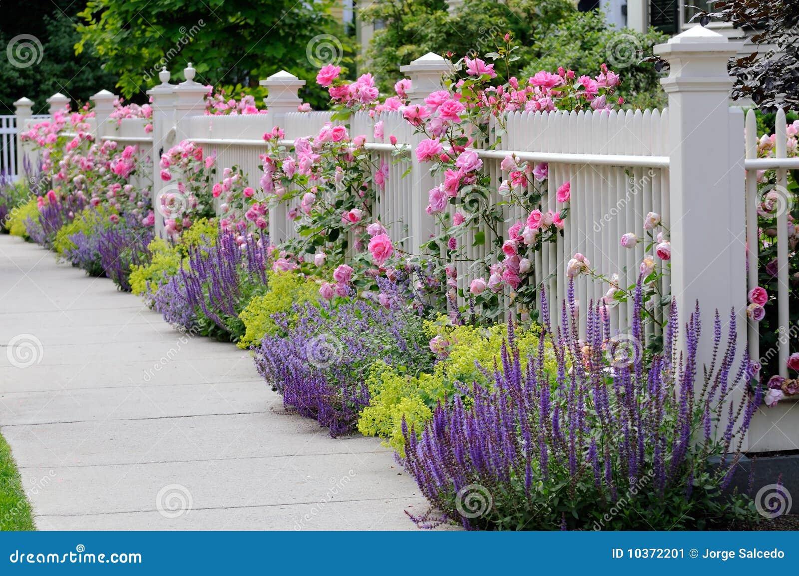 cerca para jardim branca:White Climbing Roses Fence