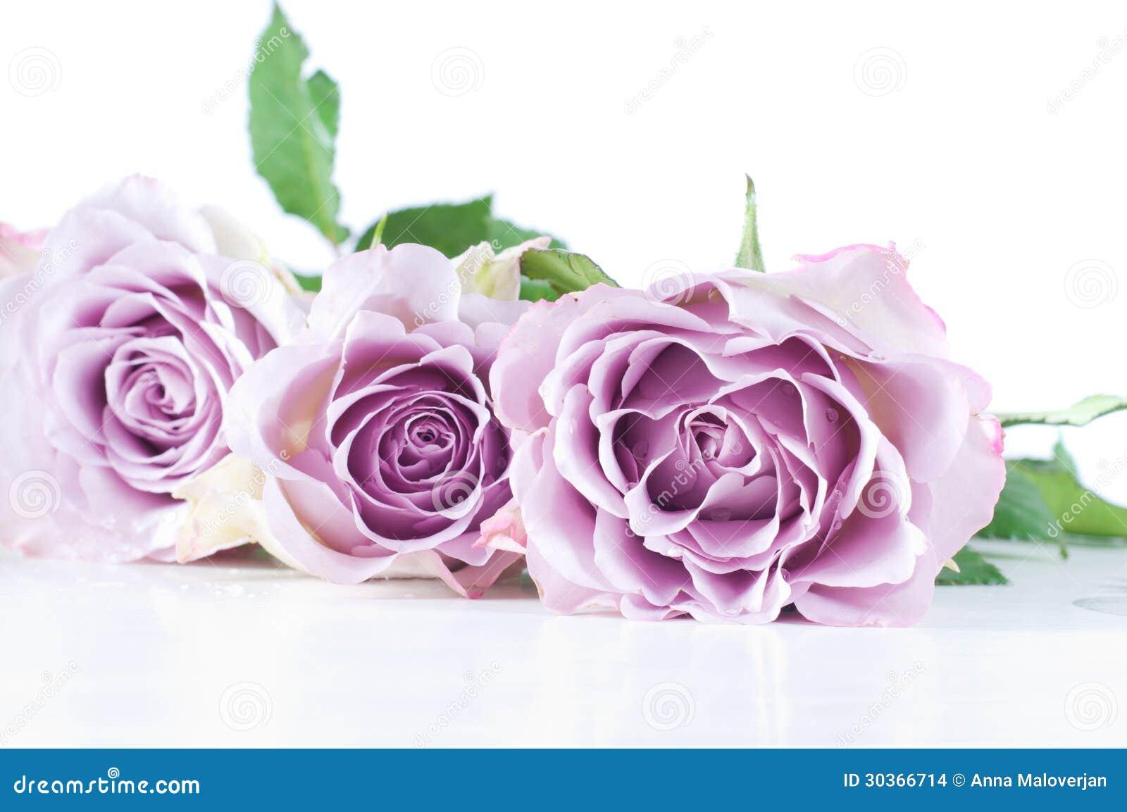 Rosas de la sombra en colores pastel imagenes de archivo - Fotos de rosas de colores ...