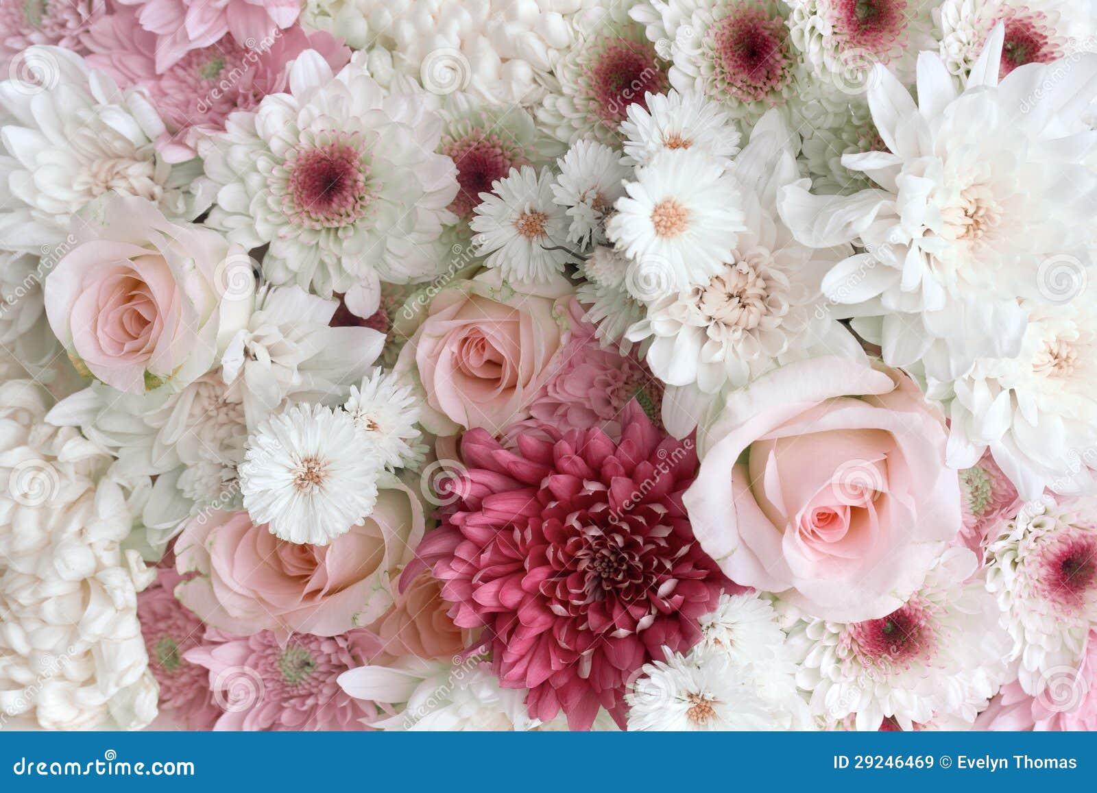 Download Rosas e margaridas imagem de stock. Imagem de arranjo - 29246469